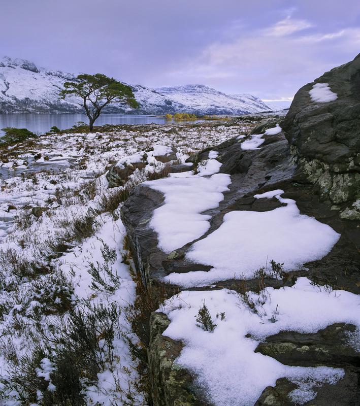 Winter Light Loch Maree, Loch Maree, Torridon, Scotland, Scots Pine, umbrella, snow, ledge, light, Slioch, grove, attent photo