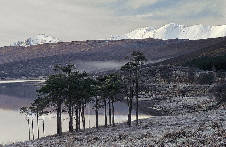Winter Loch a Chroisg, Loch a Chroisg, Achnasheen, Scotland, muted, palette, trees, still, freezing, mist, frost  photo