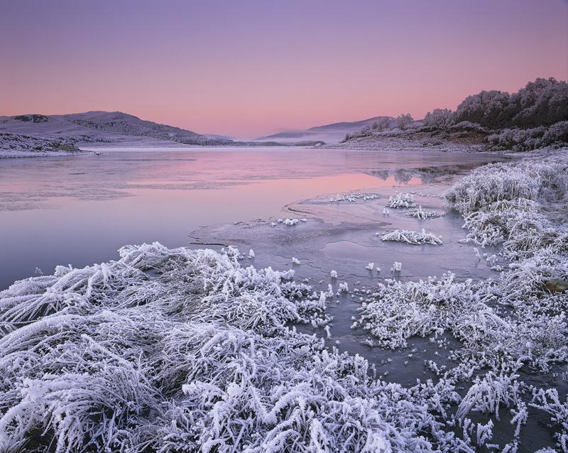 Winter Rose, Loch Achanalt, Achnasheen, Scotland, cold, freezes, ground, crunch, stiff, hoar, frost, sunrise, twilight  photo