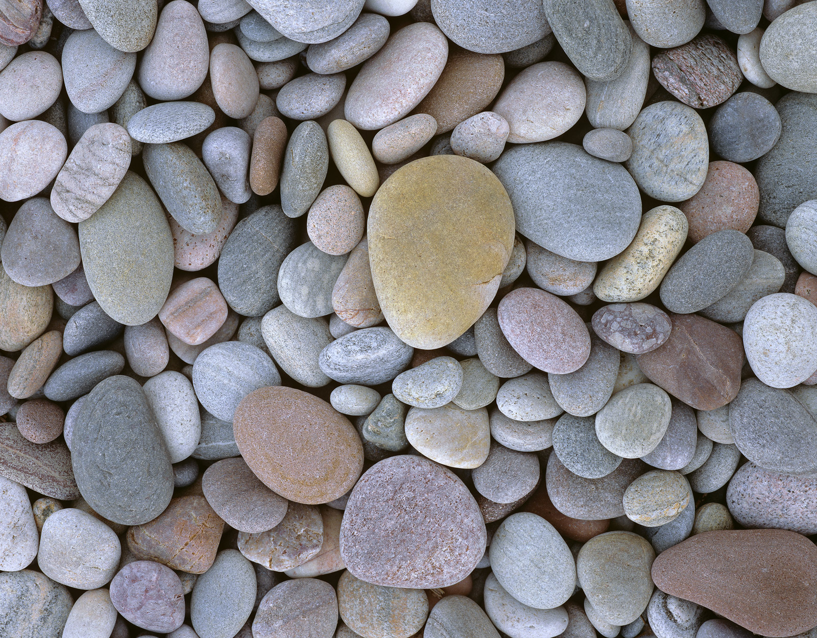 Tightly packed coloured pebbles, sand blasted, air died and worn smooth by the repeated grinding action of the tides line the...