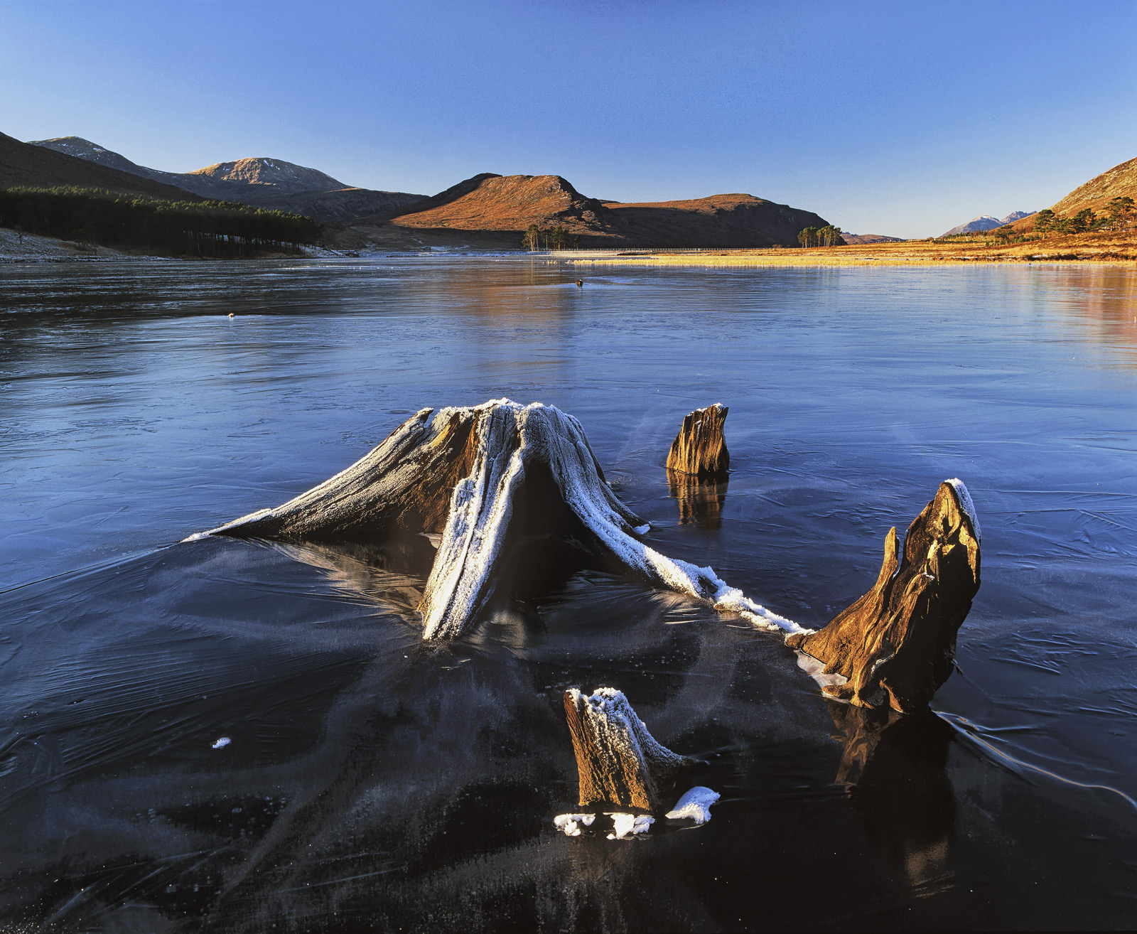 Loch Droma has a number of partially submerged tree roots located around its edges. When the water is low they become visible...