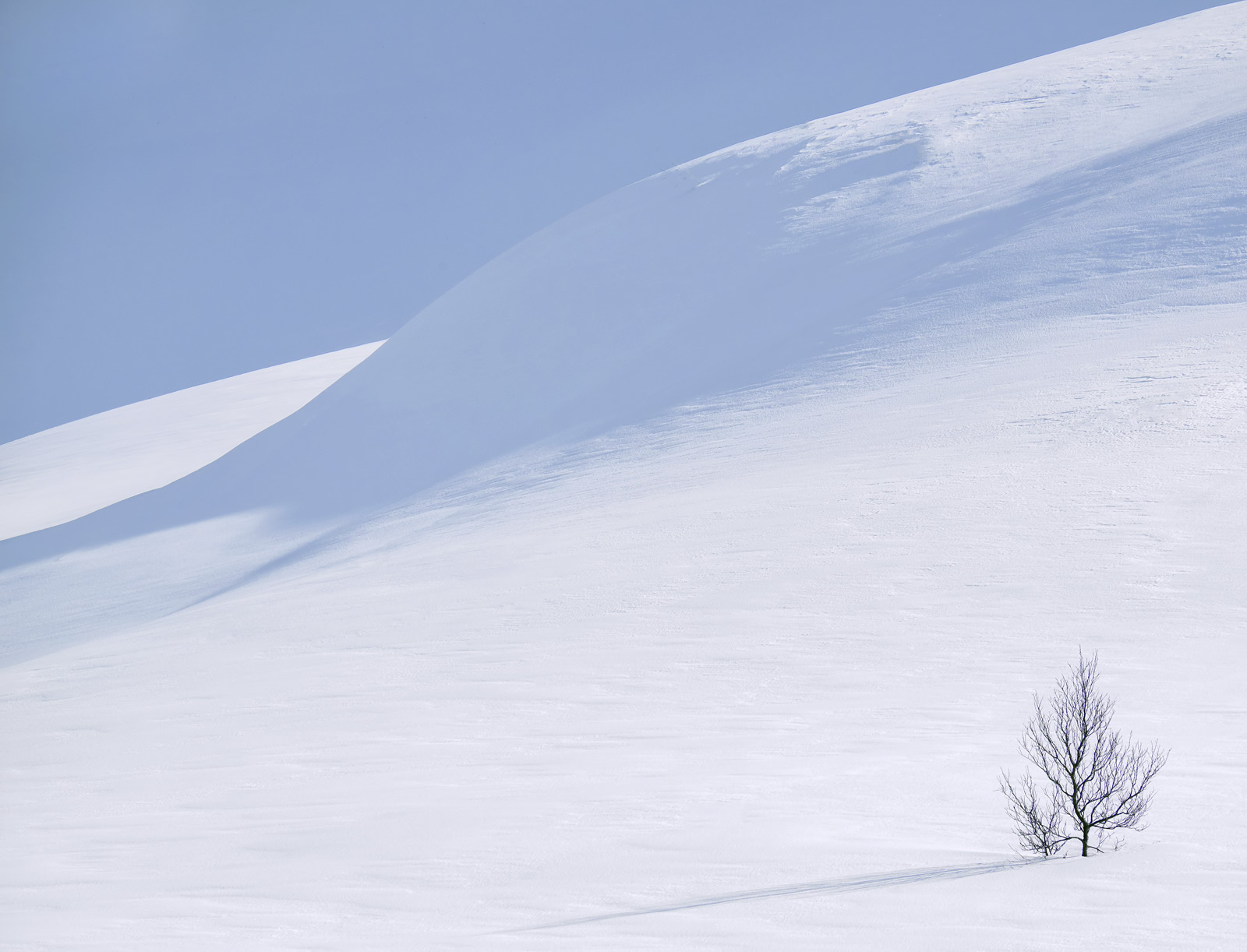 Anderdalen National Park is in a high mountainous plateau which in winter is covered with vast snow fields punctuated by nothing...