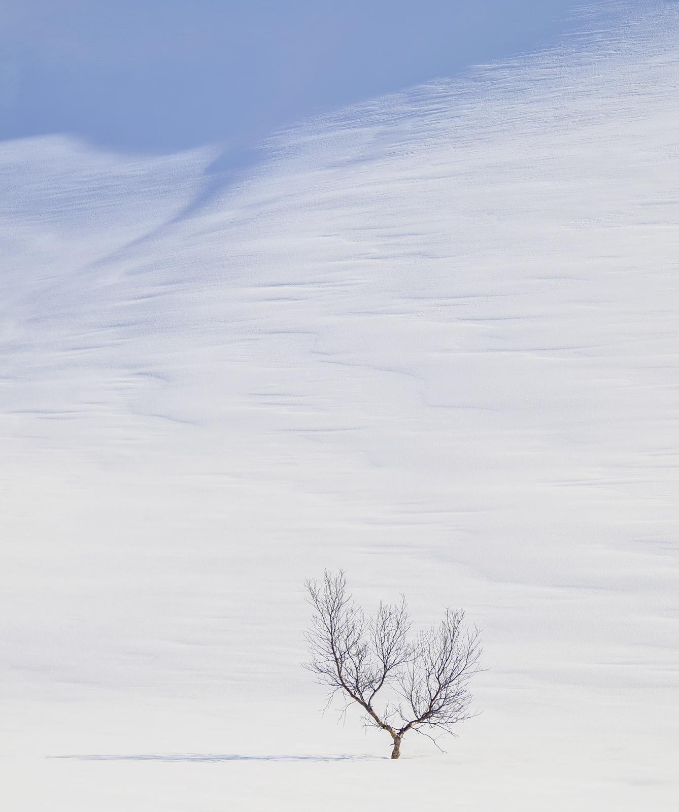 Art Of Snow 6, Anderdalen Nat Park, Senja, Norway, plateau, mountainous, purity, spurious, purity, blue, shadows,, photo