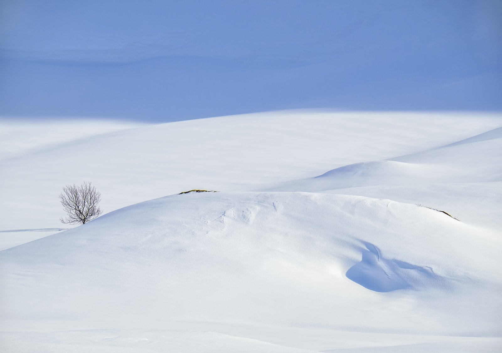 Art Of Snow 9, Anderdalen Nat Park, Senja, Norway, blue, mountainous, plateau, snow, birch, trees, purity, light, bumps , photo