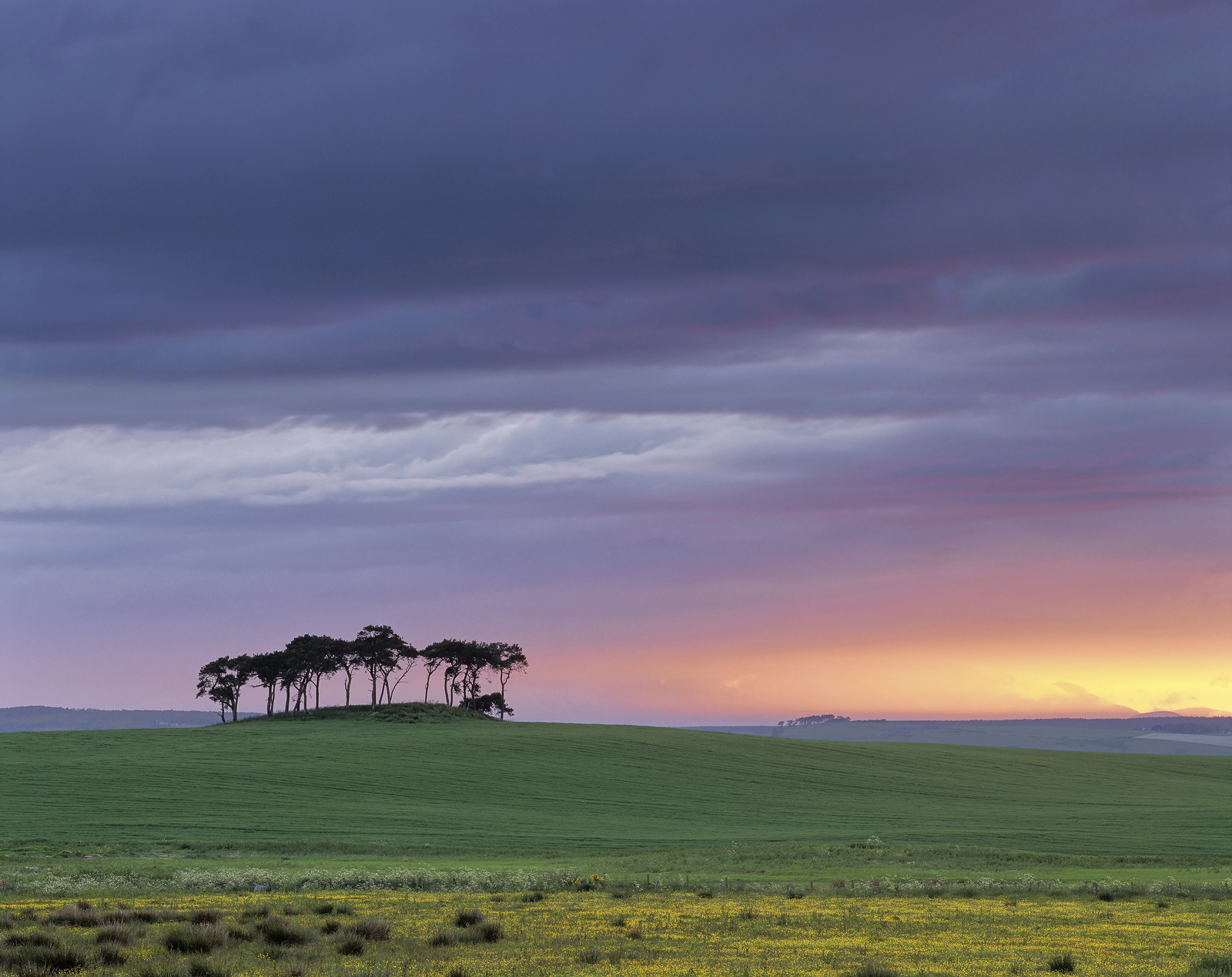 A rainbow of colours presents itself shortly after the summer sun has set behind this lonesome grove of silhouetted Scots pine...