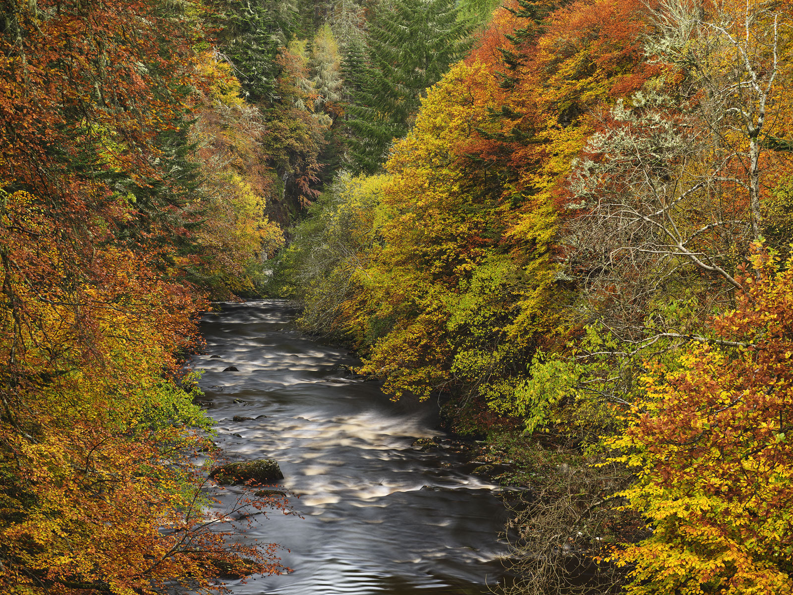 Very little can compare with the vibrancy of colour usually found in Scotlands premier autumnal glens like Cannich, strathfarrar...