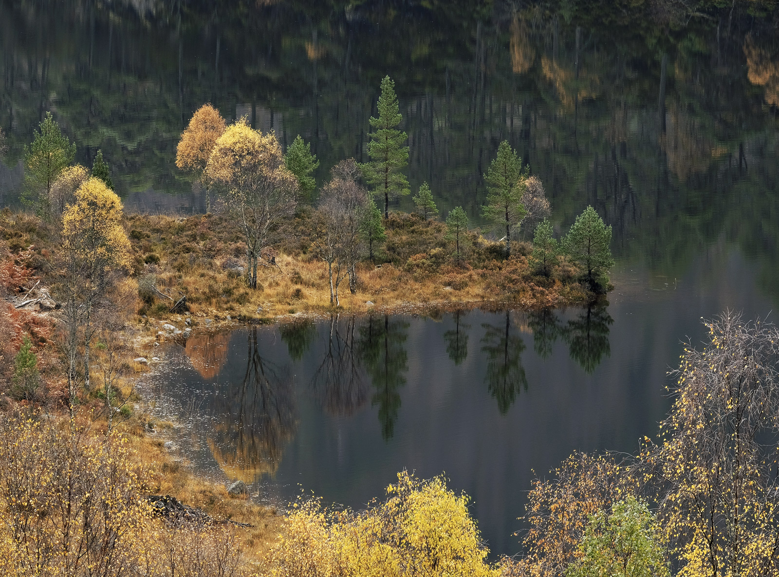 One or two locations are particularly known for their autumn colour in this case Glen Affric has the largest stand of naturally...