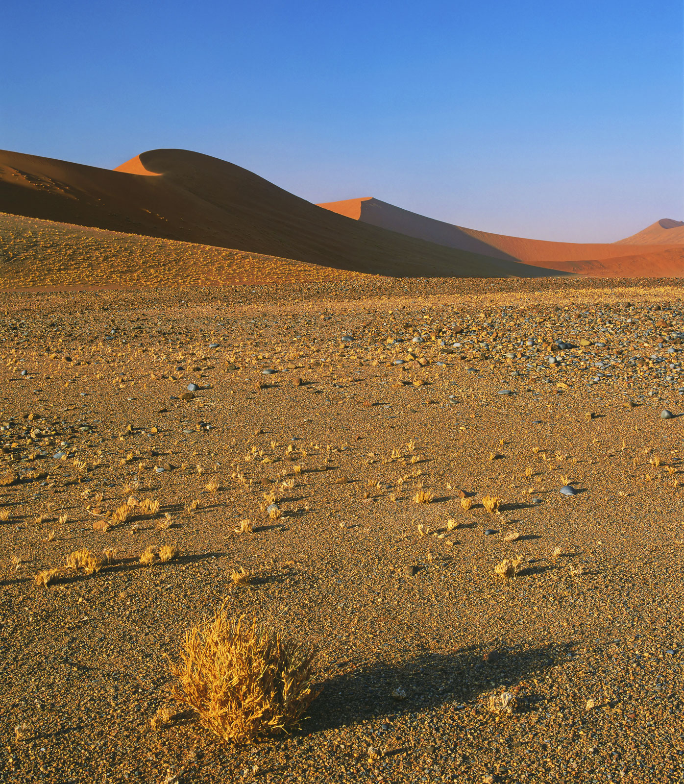 Barren, Sossusvlei, Namibia, Africa, iron, orange, sand, desert, salt pan, dessicated, tumble weed, soft curves, dune, r, photo