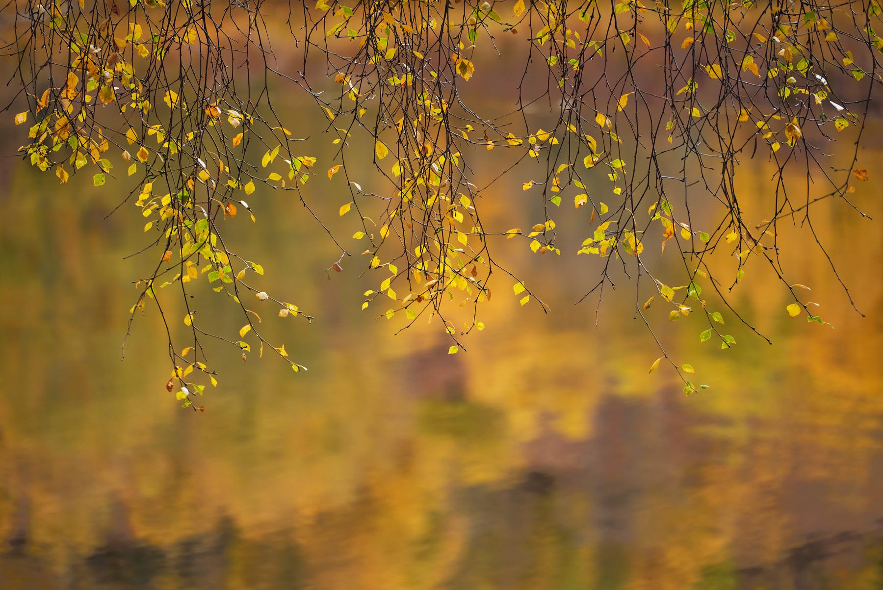Birch Blinds, Glen Cannich, Highlands, Scotland, glen, river, delicate, birch, twigs, placid, still, suspended, reflecti, photo