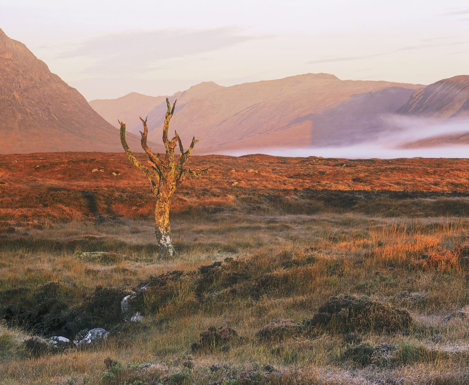 The old tree on Rannoch moor is very popular with photographers but I had never seen it in such lurid red light as I did on this...