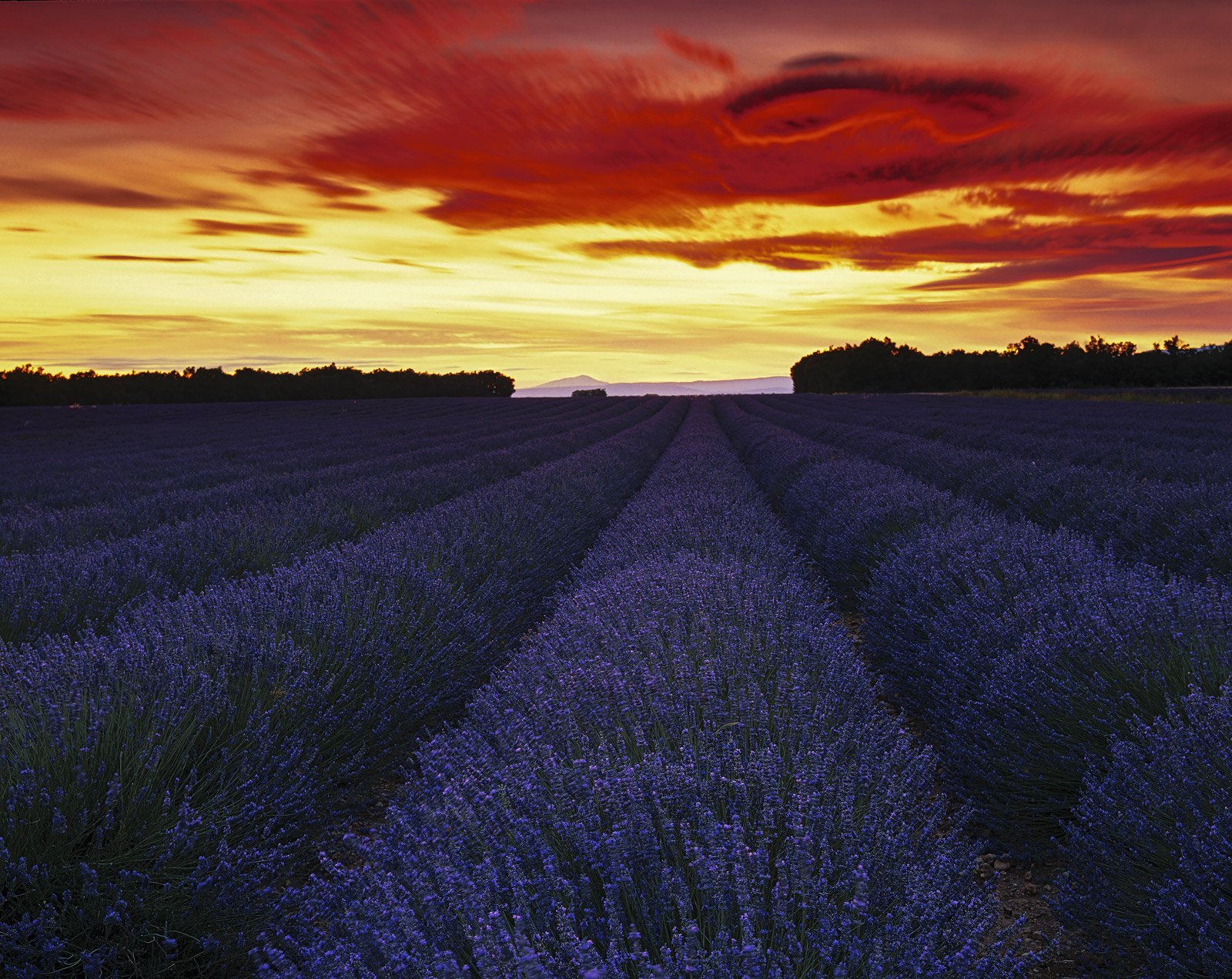 A glorious field of perfumed perfection in the form of ripened lavender became infinitely more photogenic beneath one of the...