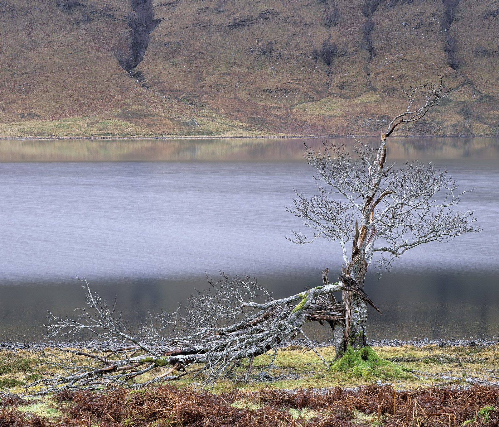 This broken tree at the edge of Loch A Chroisg is said to have been struck by lightning. I personally suspect the damage...