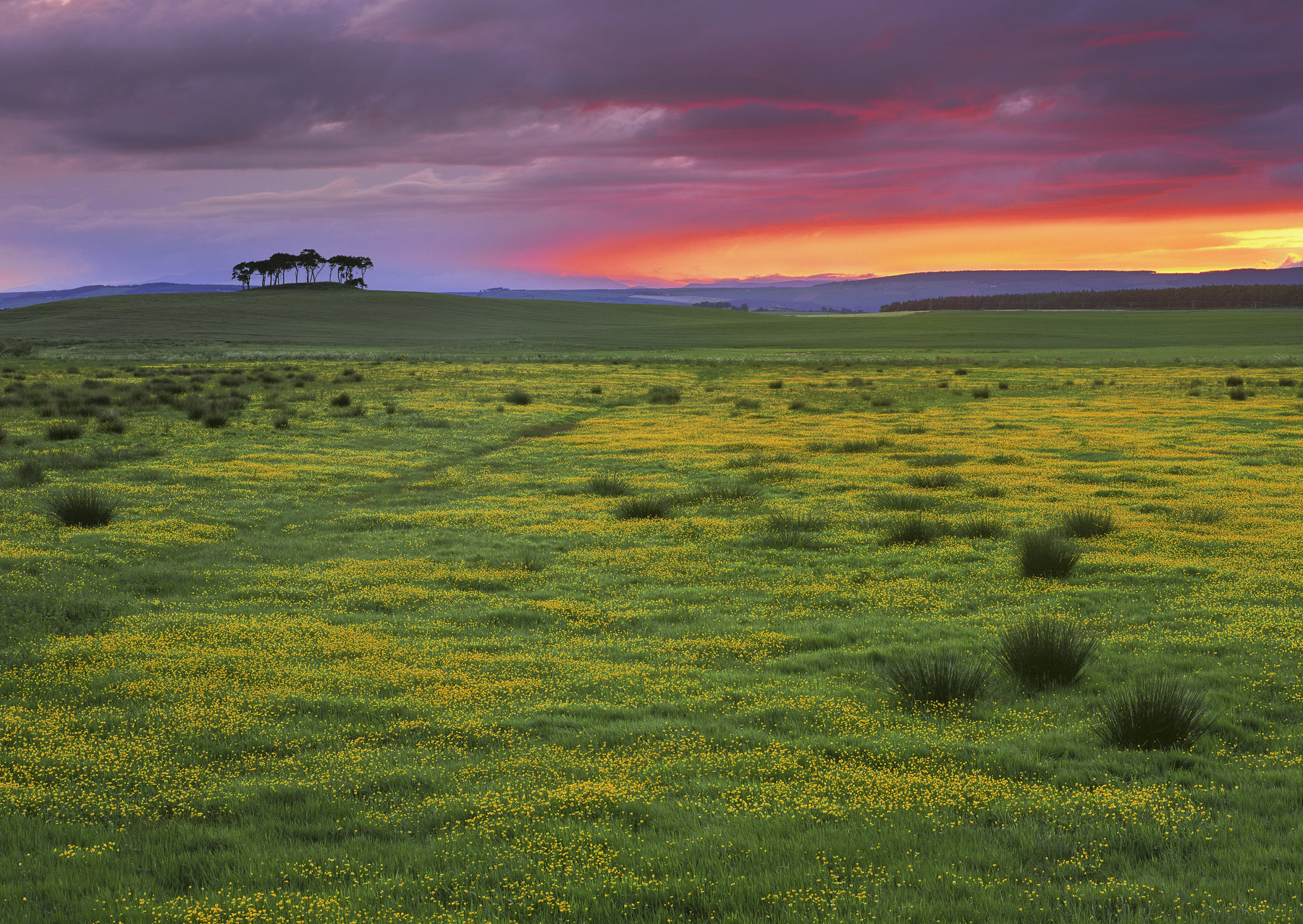 A billion blazing buttercups, golden and backlit by the fading light of a glowing crimson and orange sky a few minutes after...