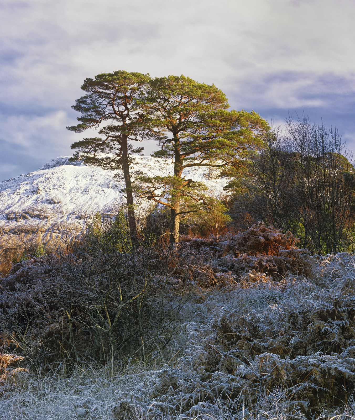 Chilled Pines Loch Tulla scenery, grove, Scots pine, morning, crisp, winter, canopy, green, pine, frost, shadows, road, , photo