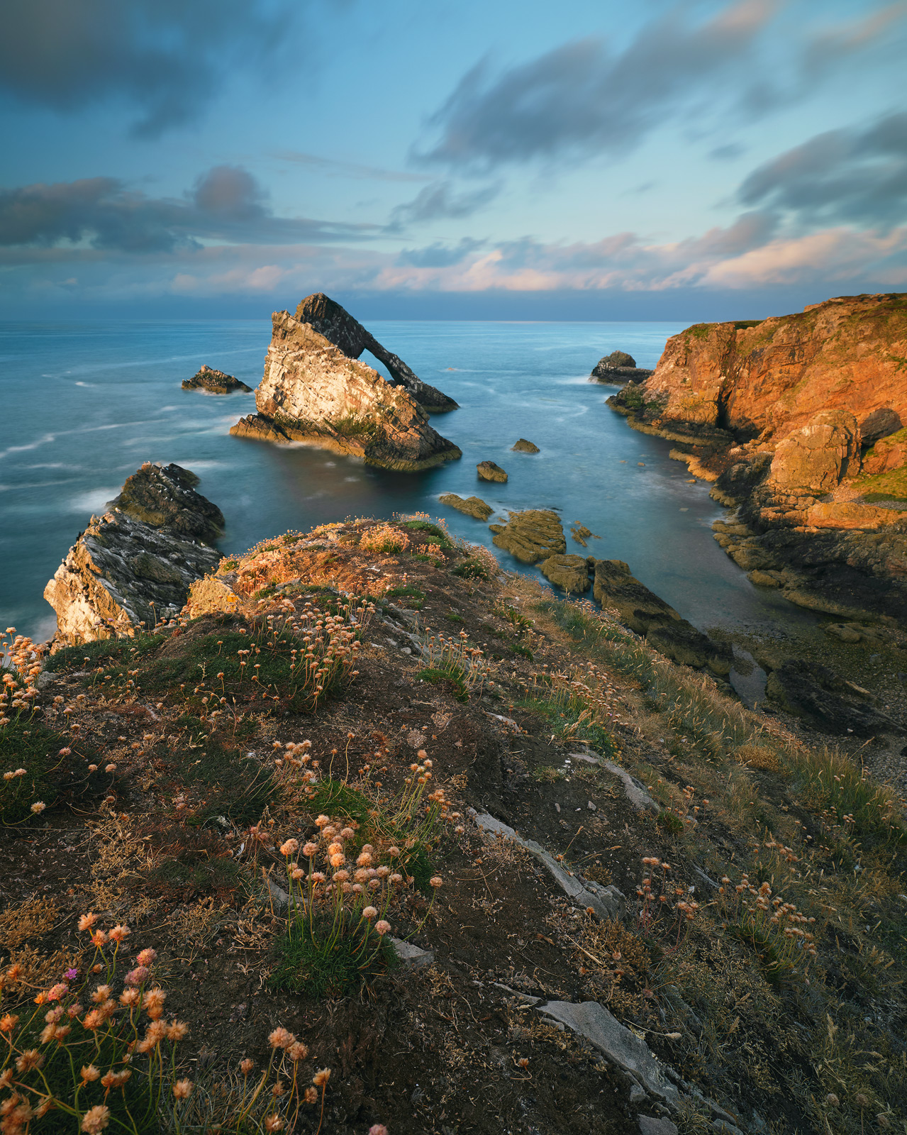 A summer sunset view from the cliff top above Portknockie's famous Bowfiddle Rock on the Moray coast with dead thrift nodding in the foreground.