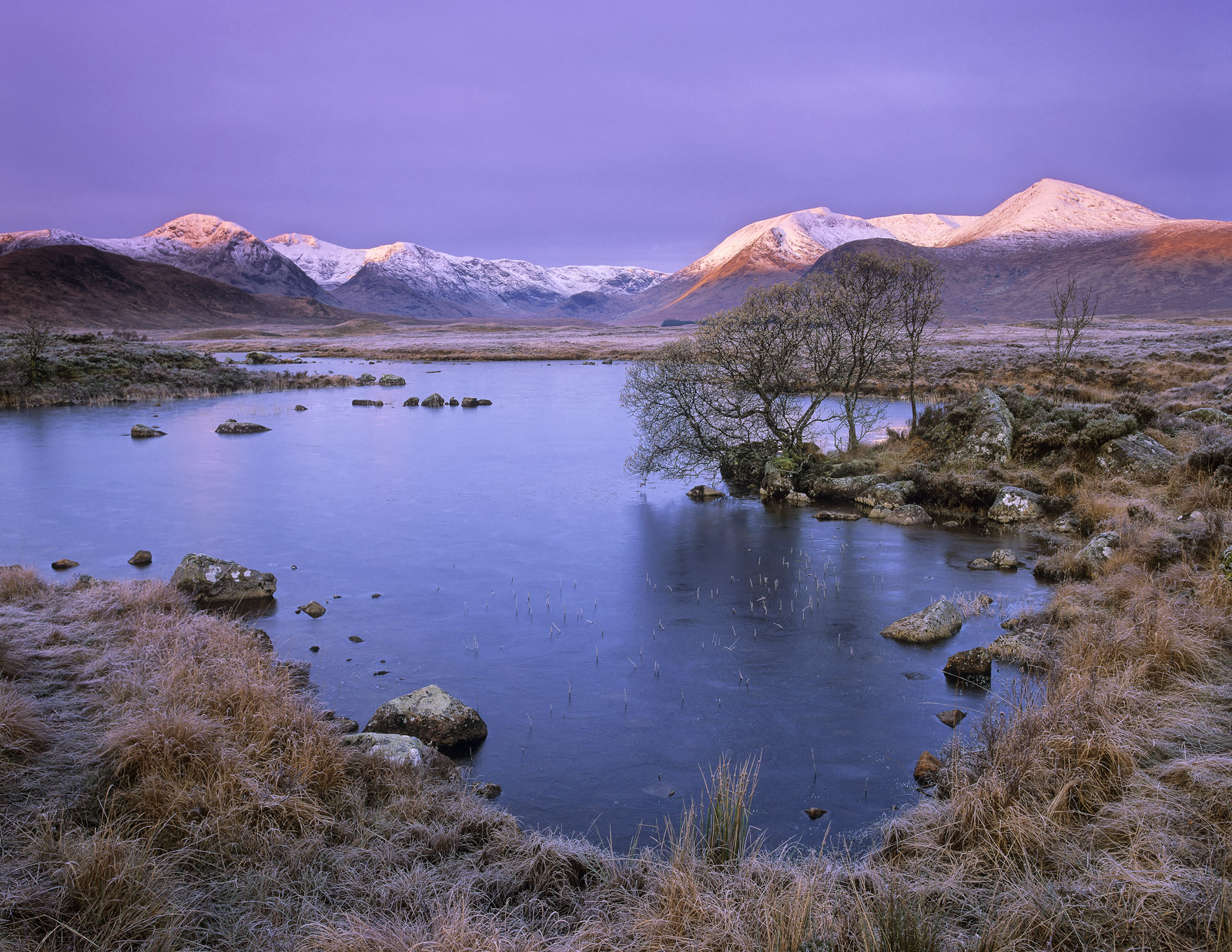 Colour Purple Rannoch, Rannoch Moor, Glencoe, Scotland, intense, delicacy, soft, sunlight, autumnal, snowy, grasses, ric, photo