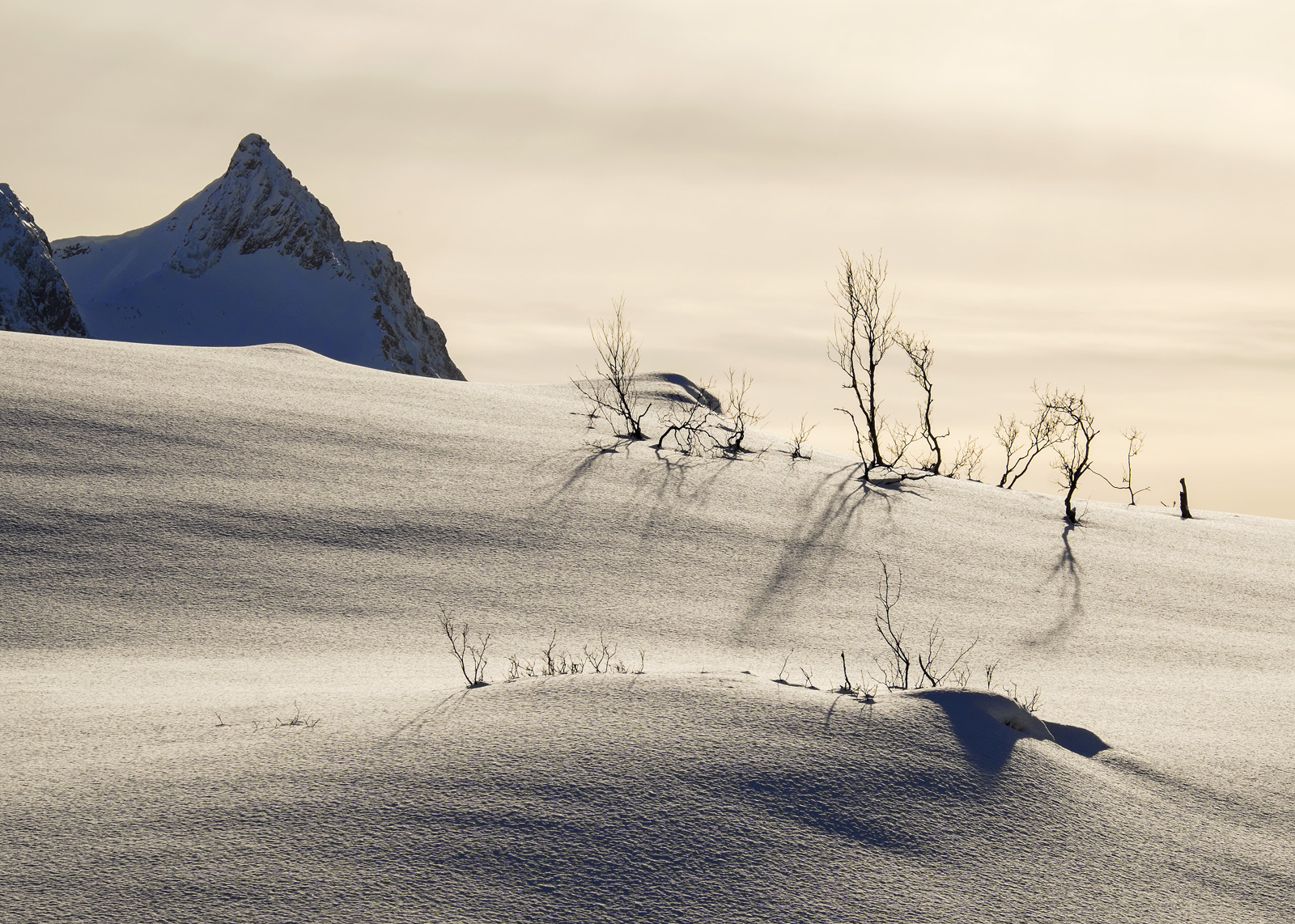 Daliesque 1, Eidet, Senja, Norway, beautiful, birch, little, trees, bowed, prevailing winds, mountain, plateau, white, g, photo