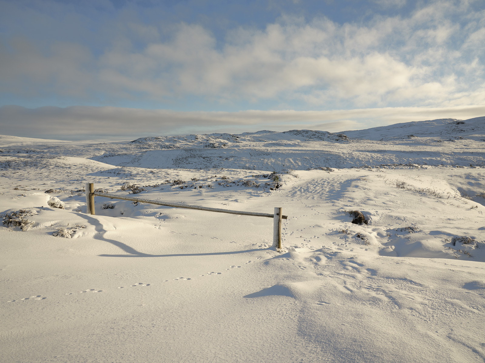 Golden late afternoon sunlight lit up snow covered Dava Moor beneath a cloud flecked blue sky.  The shaded areas adopted the...