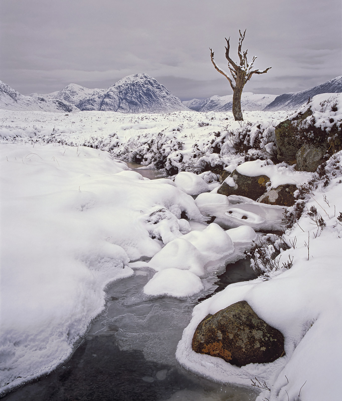 This iconic tree on Rannoch Moor has sadly succumbed to the Autumn gales and is dead and buried. This was one of the final...