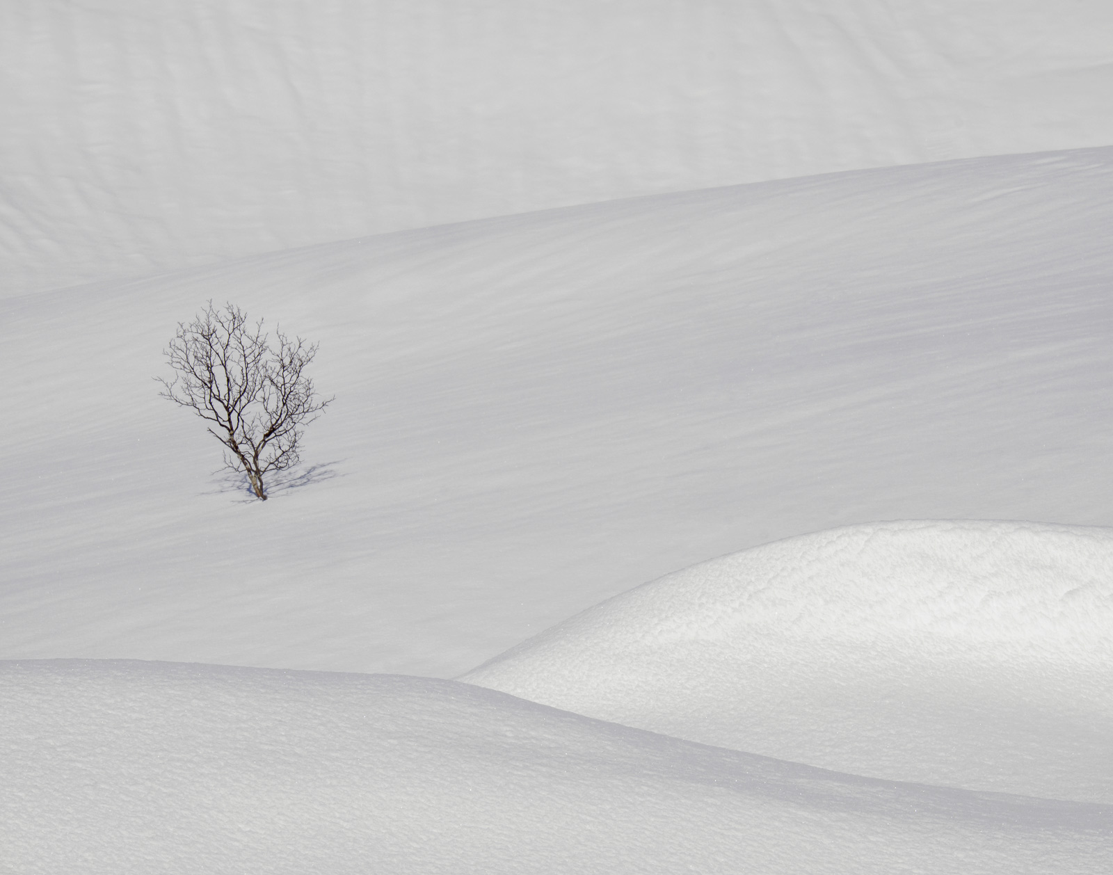 Another of these mesmerisingly beautiful snow field shots featuring a birch tree submerged in 4 to 5 metres of snow. Despite...