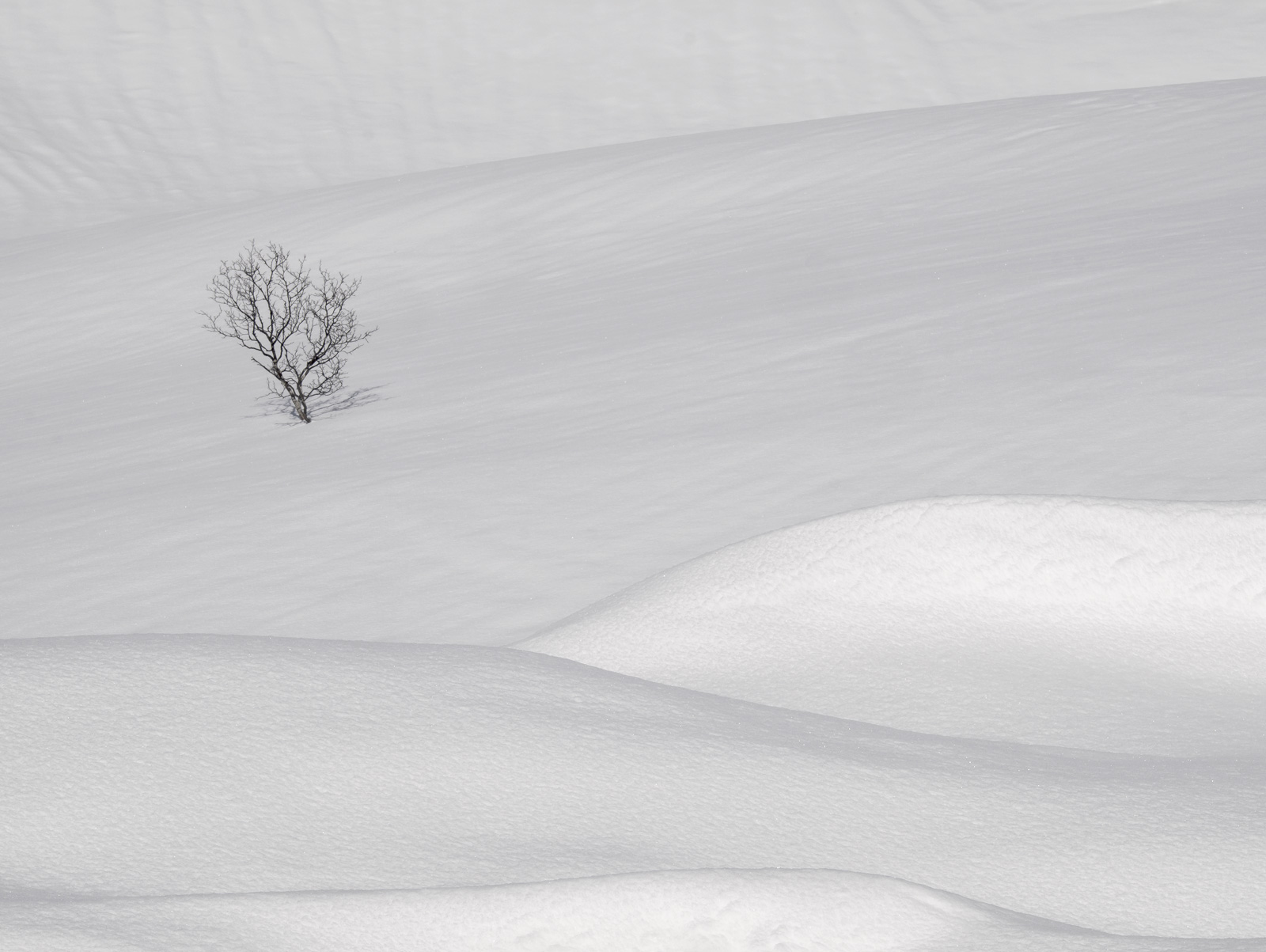 A tree isolated amongst random folds of seductively sculpted monochromatic snow.  The snow fields of Anderdalan are huge...
