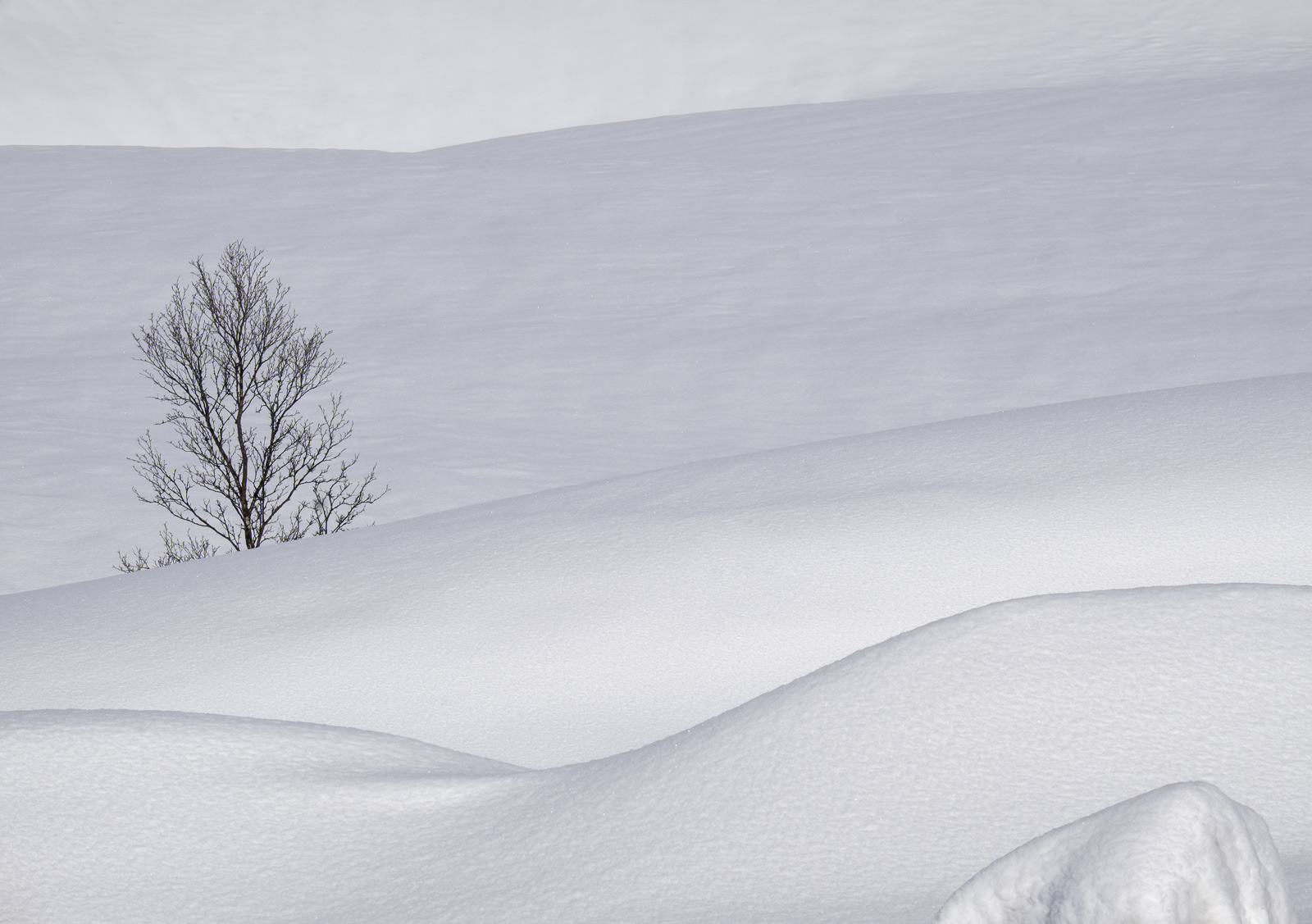 A tree isolated amongst random folds of seductively sculpted monochromatic snow.  The snow fields of Anderdalan are huge but...