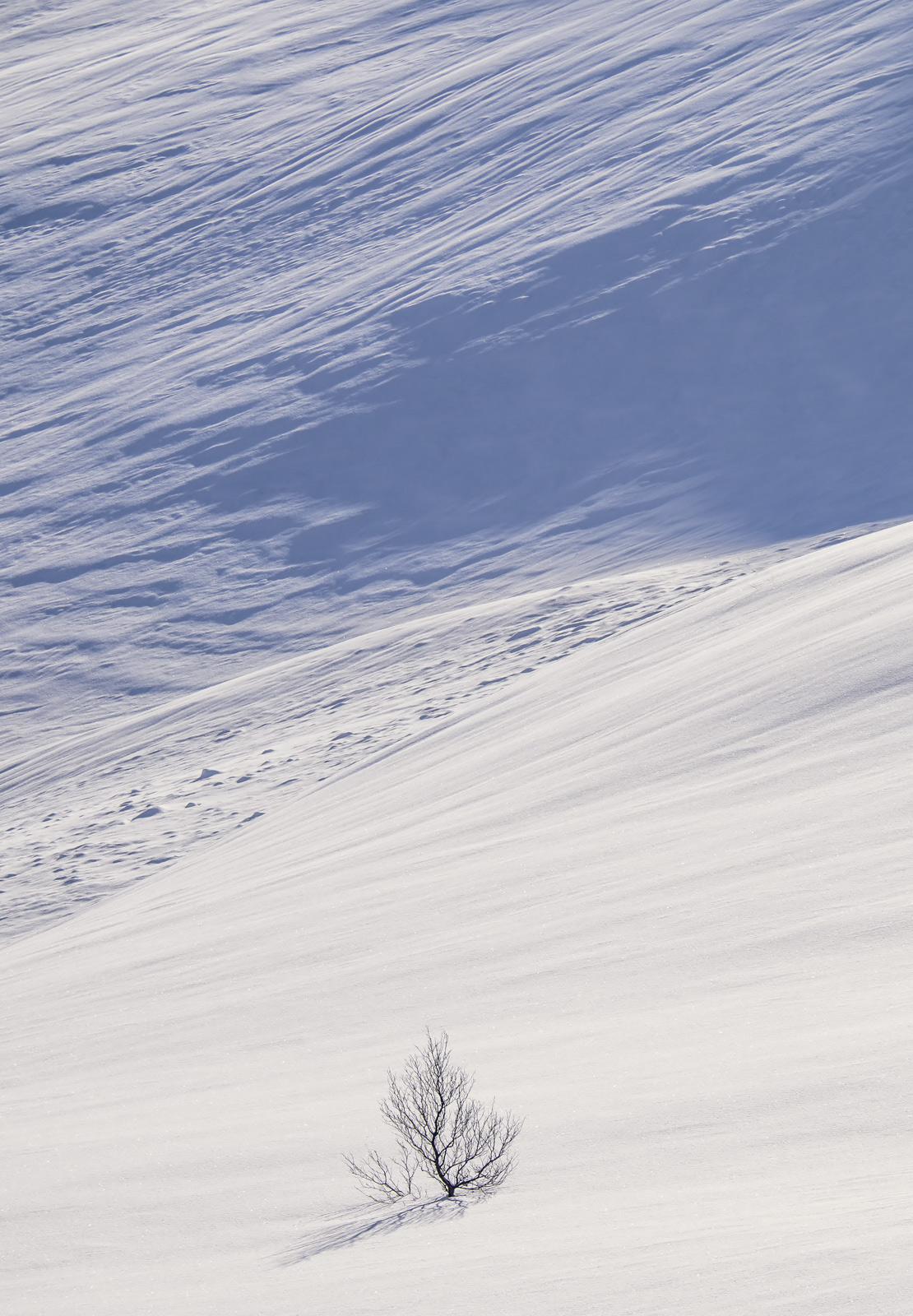 Deep Snow 9, Anderdalan, Senja, Norway, vast, empty, snow, lone, tree, graphics, patterns, geometric, Yin-Yang, unblemis, photo