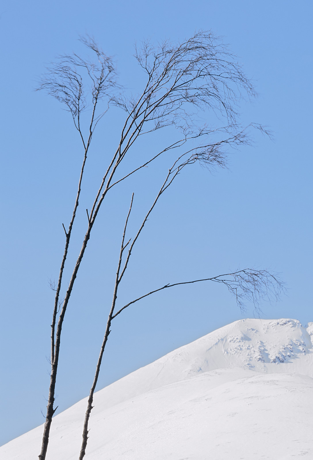These amazingly delicate birch trees are in the shadow of a snow capped Beinn Eighe. They are very carefully positioned...
