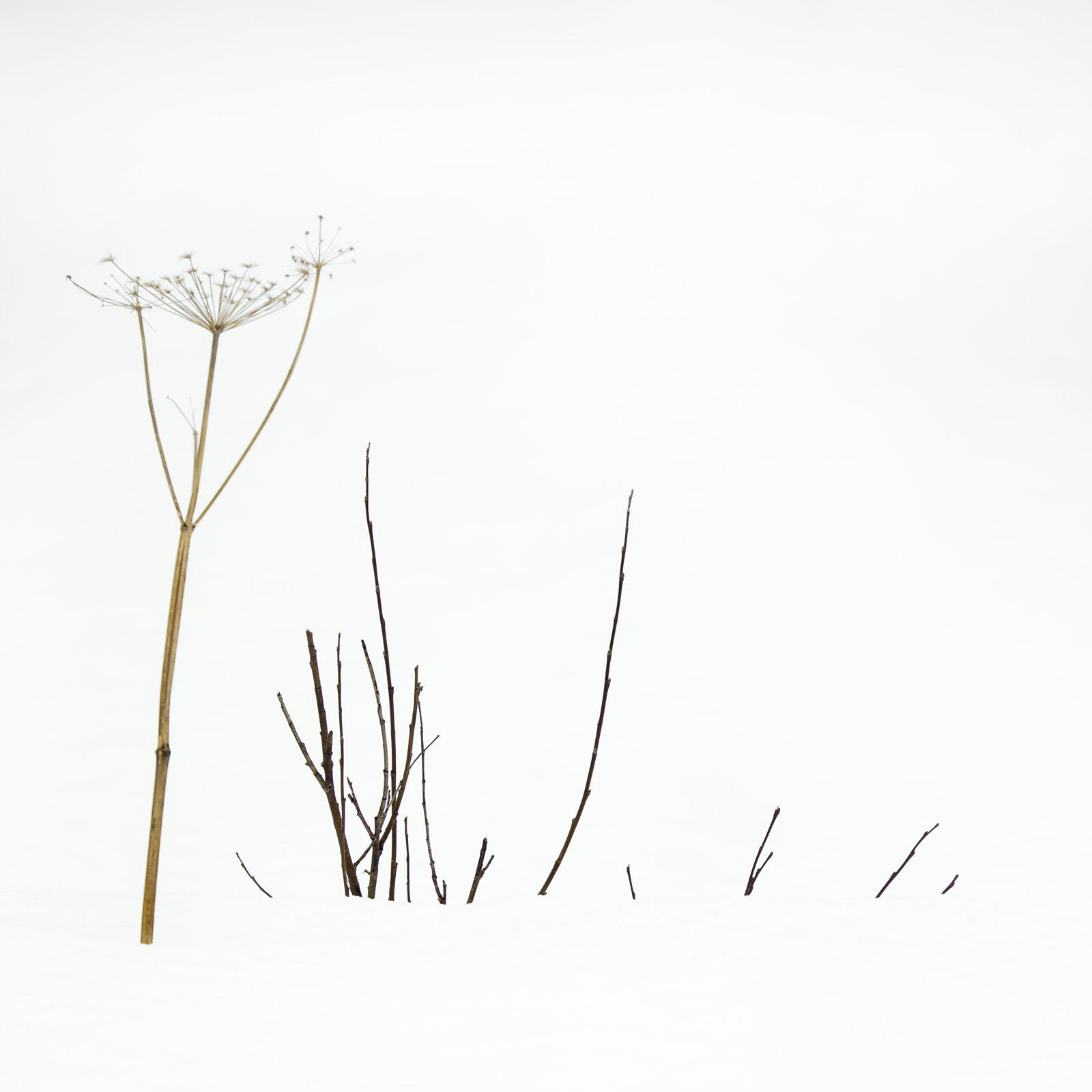 Dont Shoot, Ersfjord Bay, Senja, Norway, fun, seed head, grass, hands up, blonde, Afro, high key, minimalist, stark, photo