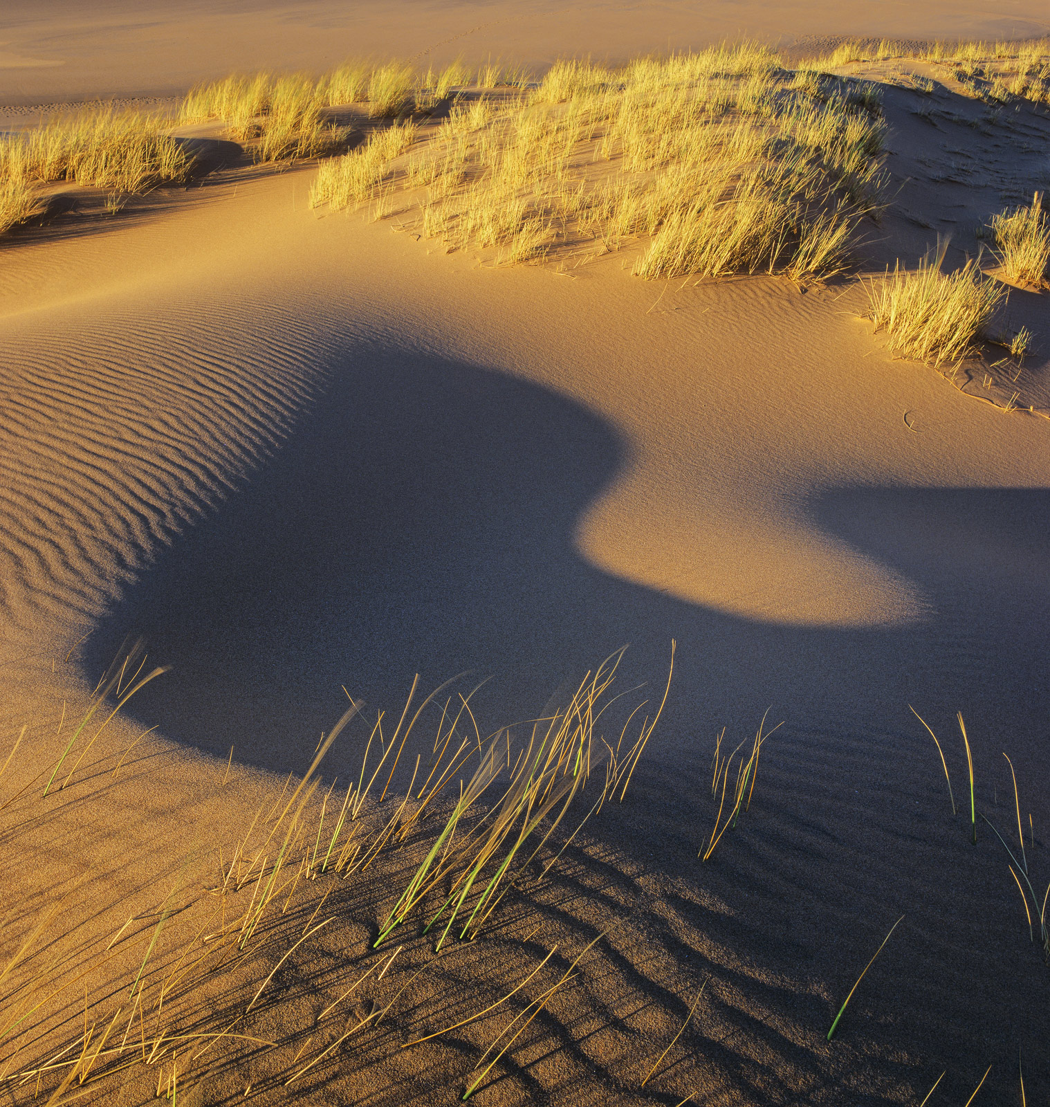 Dune Genie 2, Red Point, Torridon, Scotland, beautiful, shapely, shadow, slopes, dune, blue, rippled, sand, straw, grass, photo