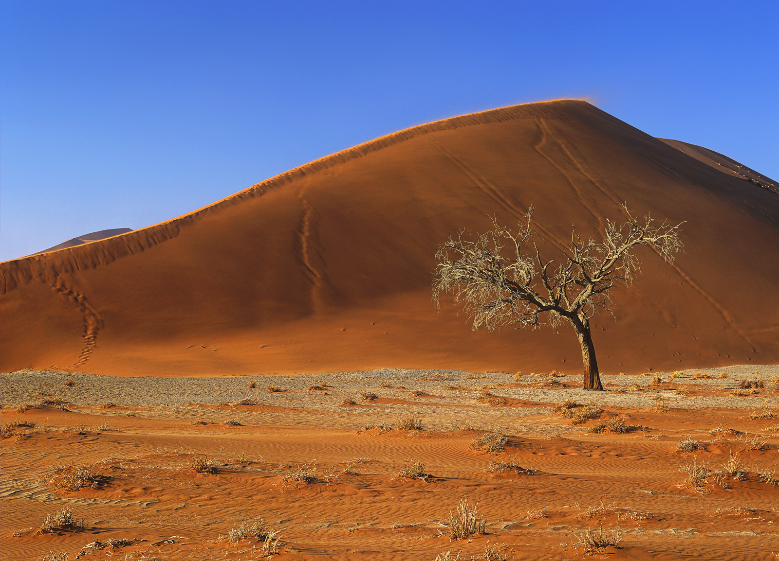 Dune Number 45, Sossusvlei, Namibia, Africa, massive, dune, summit, tree, flank, grazing, texture, contrast , photo