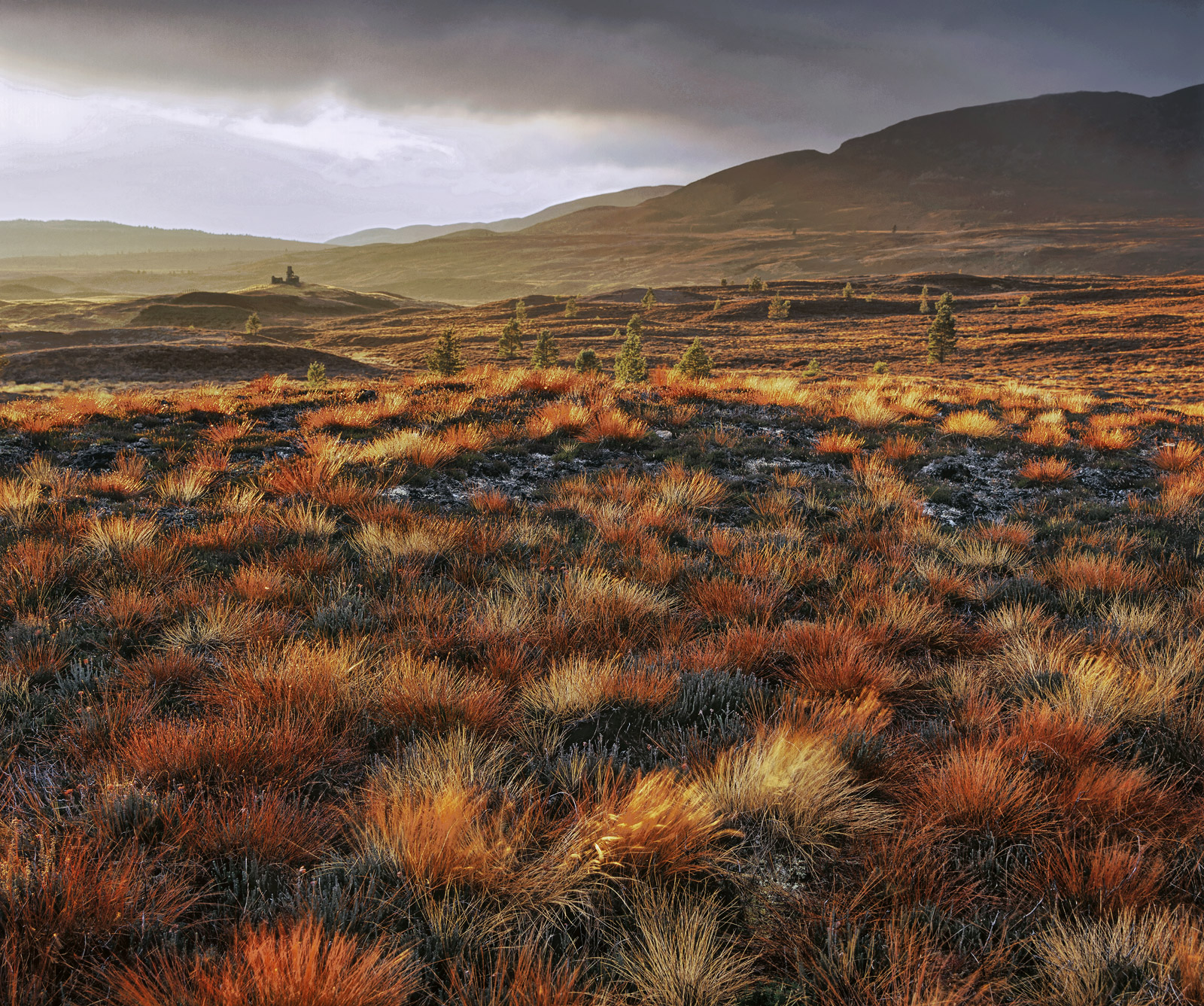 Brilliant sunlight passes below low clouds covering Dava moor and backlights the fire grass that has turned to burnt amber in...