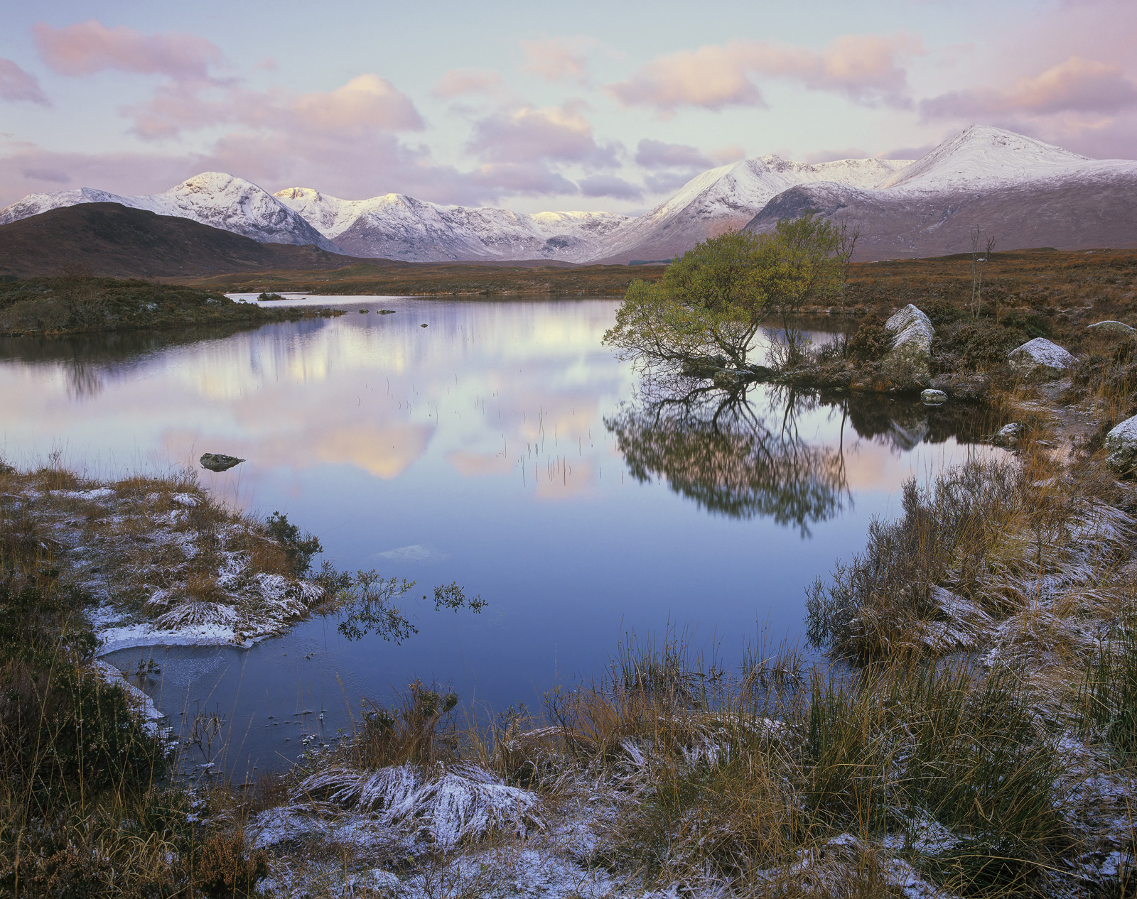 Frosted Candyfloss, Rannoch Moor, Glencoe, Scotland, freezing, morning, chilled, altitude, moorland, frosted, fringes, photo