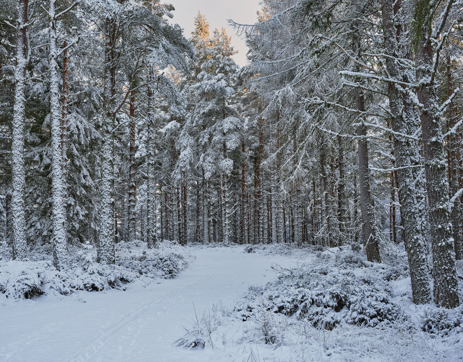 I passed through pine woodland covered with fresh new snow and trunks completely spattered where the wind had driven it in at...