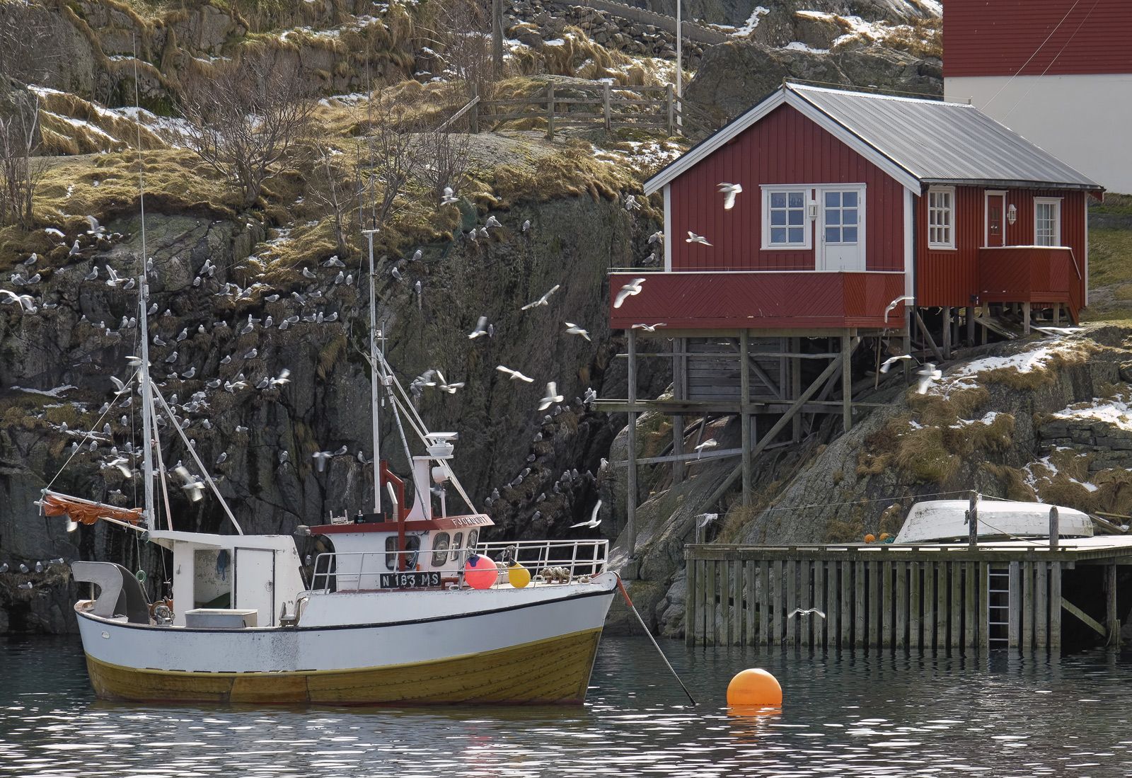 Everywhere on Lofoten that there is a spare bit of unoccupied cliff, whether close to human habitation or not there seems to...
