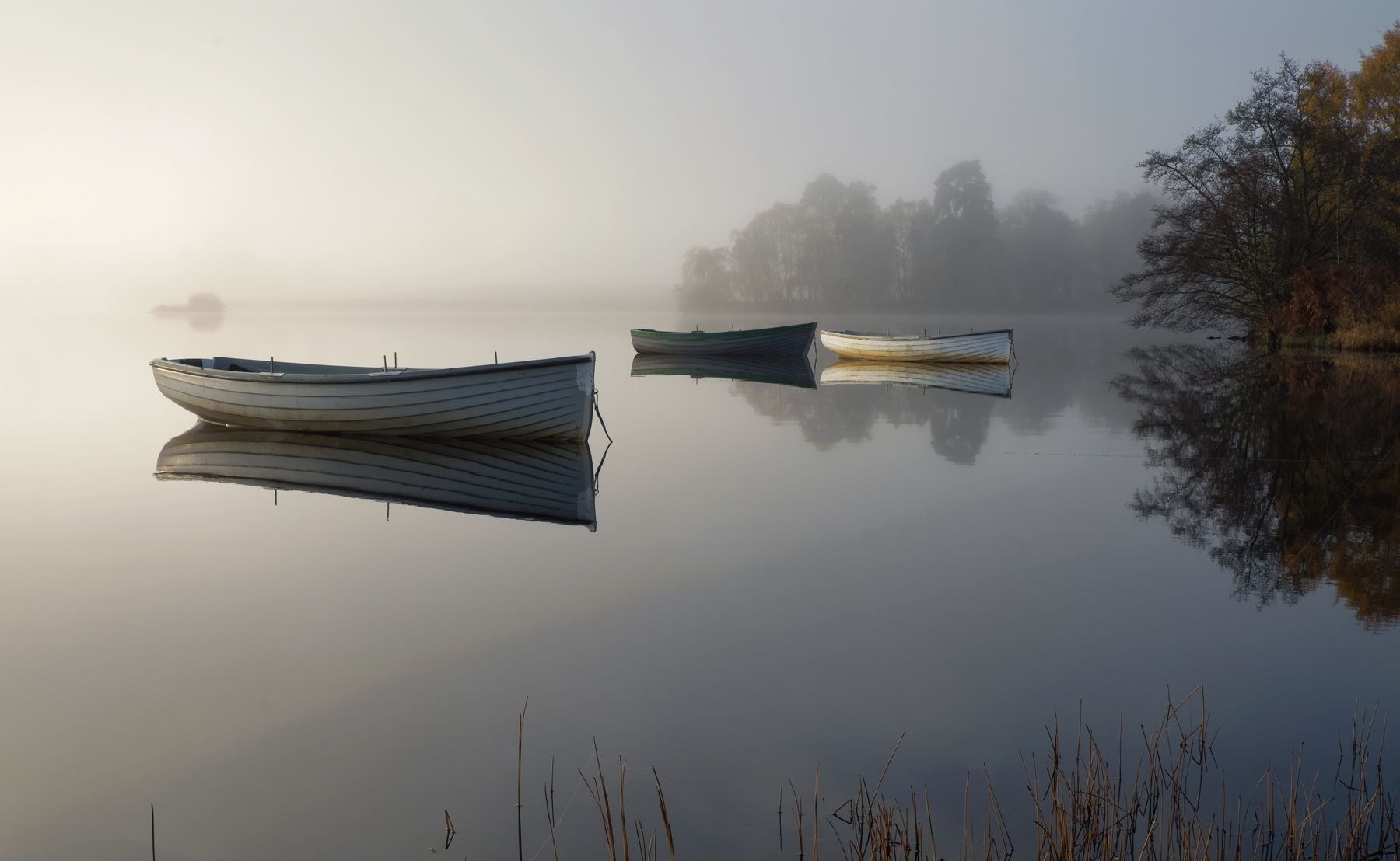 Heavenly Harbour, beautiful, mist, filtered, sunlight, birch, monochromatic, mooring, secluded, reeds, row boats, bracke, photo