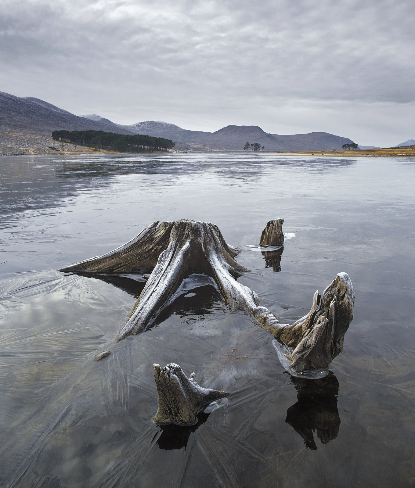 Part submerged tree stumps on the edge of Loch Droma form alien shapes entombed in ice the result of extremely low temperatures...