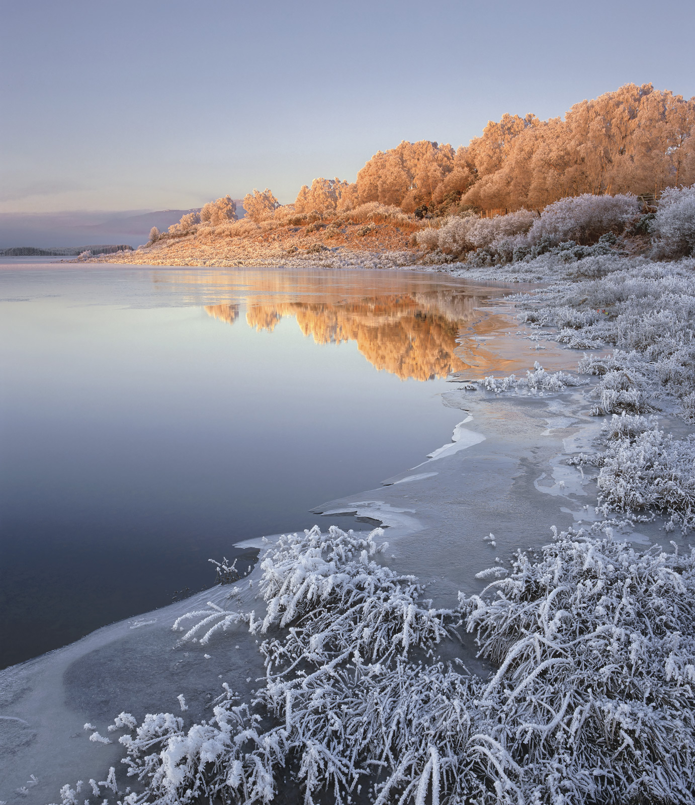 Iced Ginger, Loch Achanalt, Strathbran, Scotland, sliver, caramel, sunrise, frosted, birch, trees, ginger, cool, warm, b, photo
