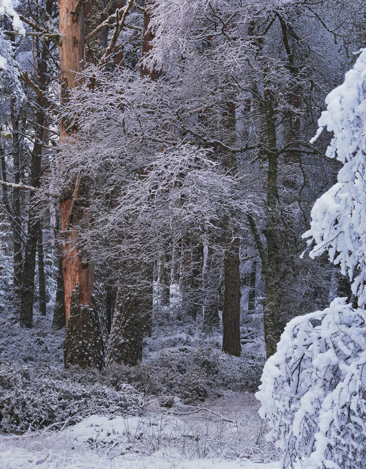 Apart from the sheer wonder of being amongst trees literally dripping with fresh new snow my first thought was for the poor naked...