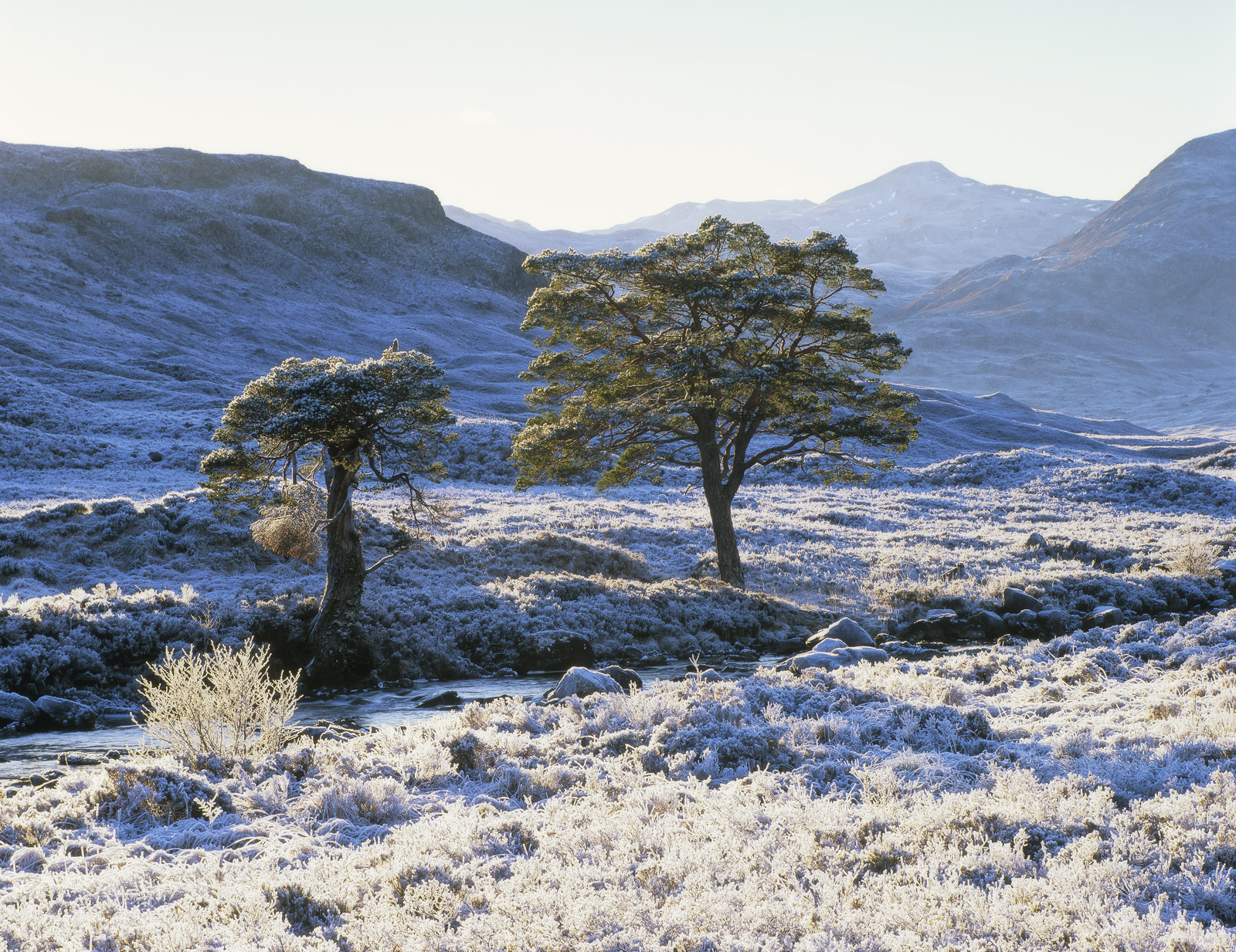 A vicious frost coated every tree, branch twig and blade of grass in thick hard white rime throughout the glen of Torridon and...