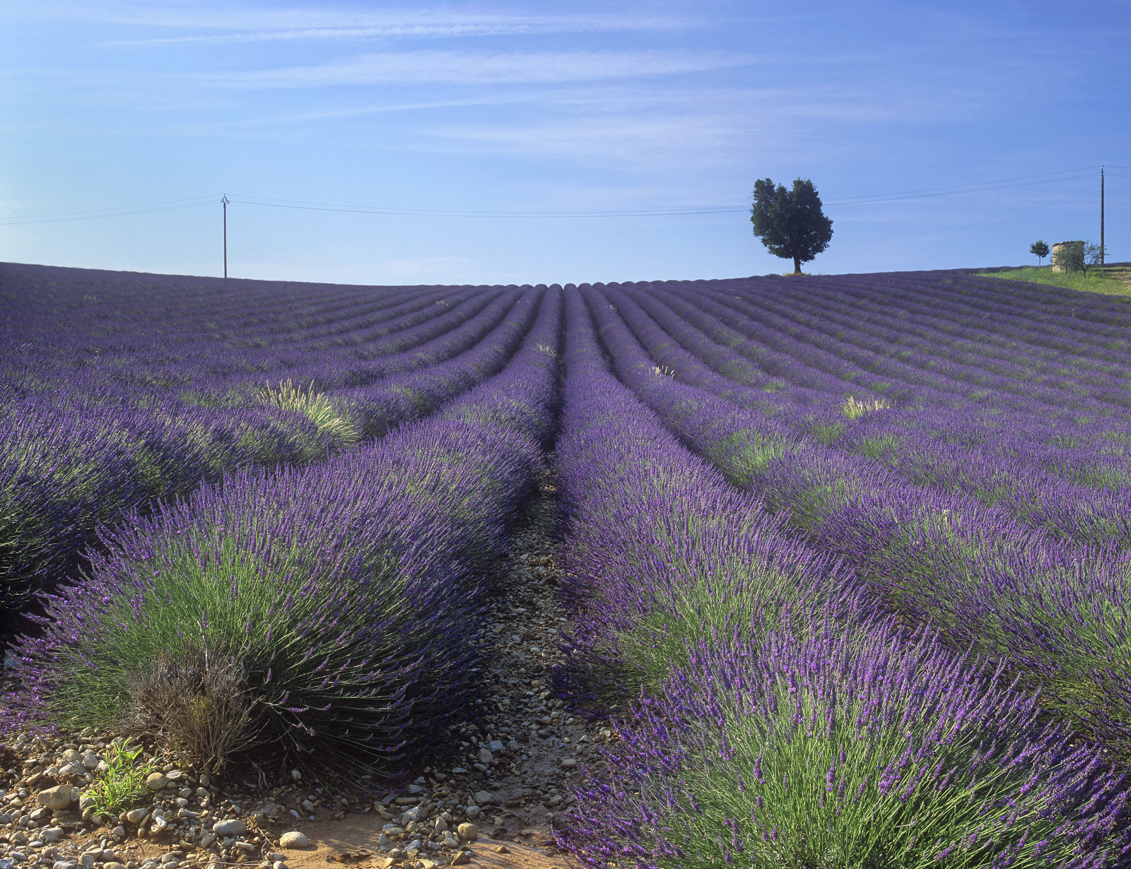Just outside Valensole are a couple of sloping lavender fields next to a series of bee hives. The slope enables the photographer...