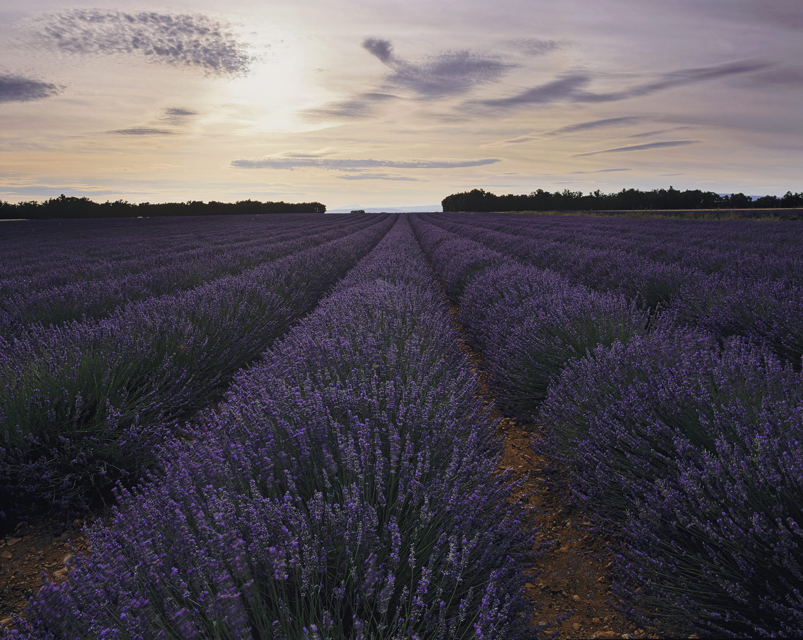 Valensole has always struck me as being the finest place to see fields of perfectly aligned stems of lavender. I try to...