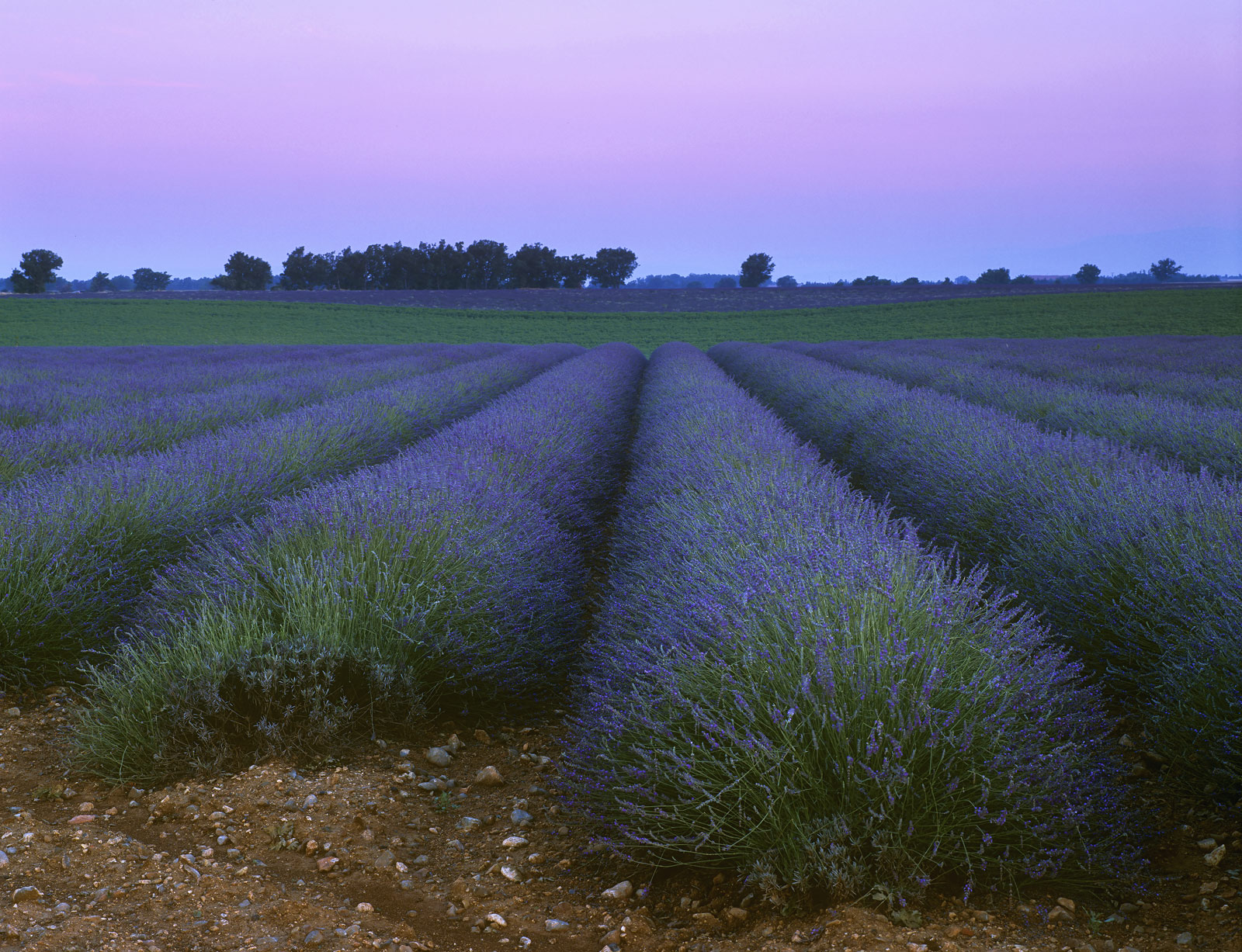 Deep blue lavender fields stretched out in front of us near the village of Valensole. I arrived well before sun up hoping...