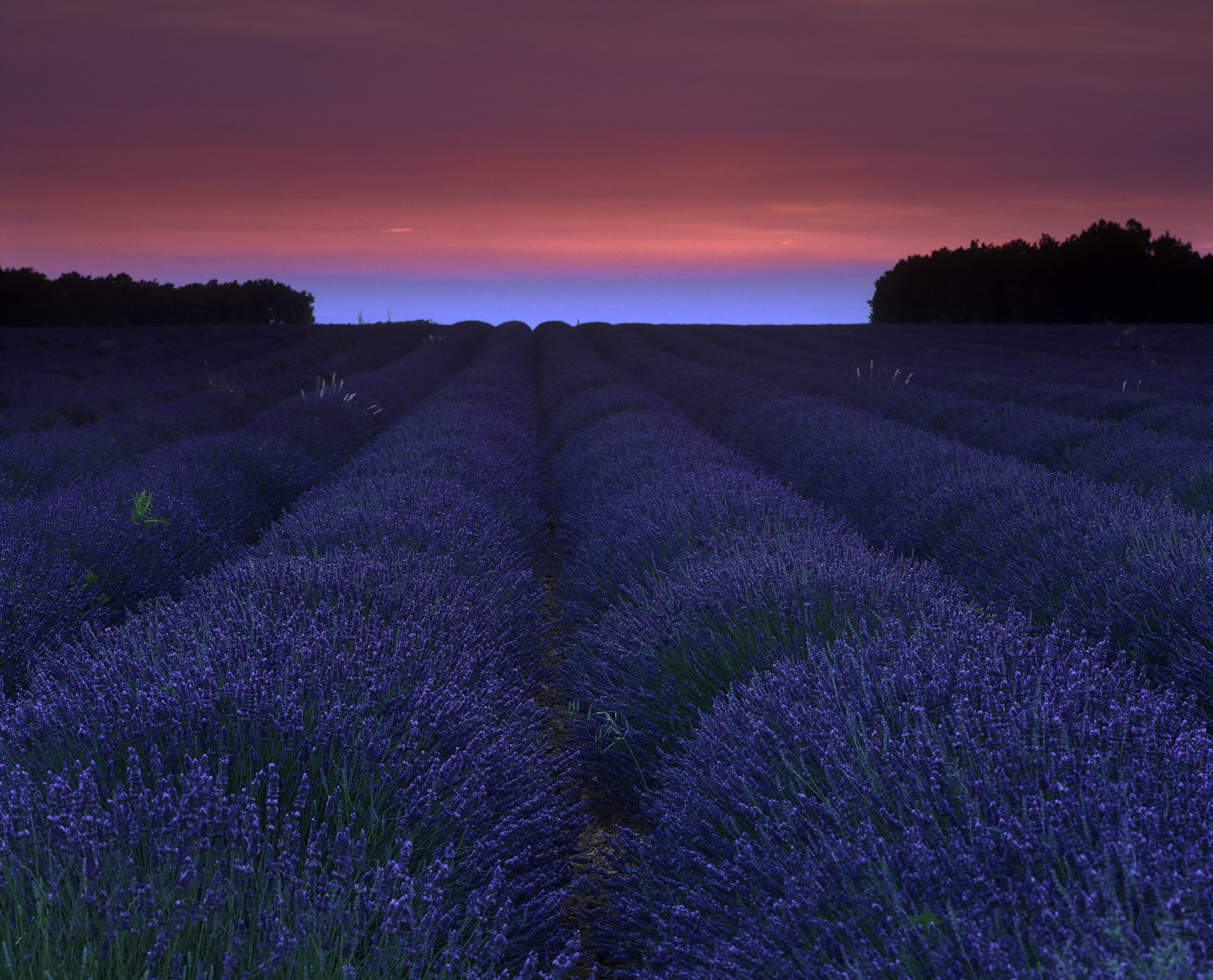 One of the very few fields that I found that seems to have been planted directly in line with the setting sun at peak of the...