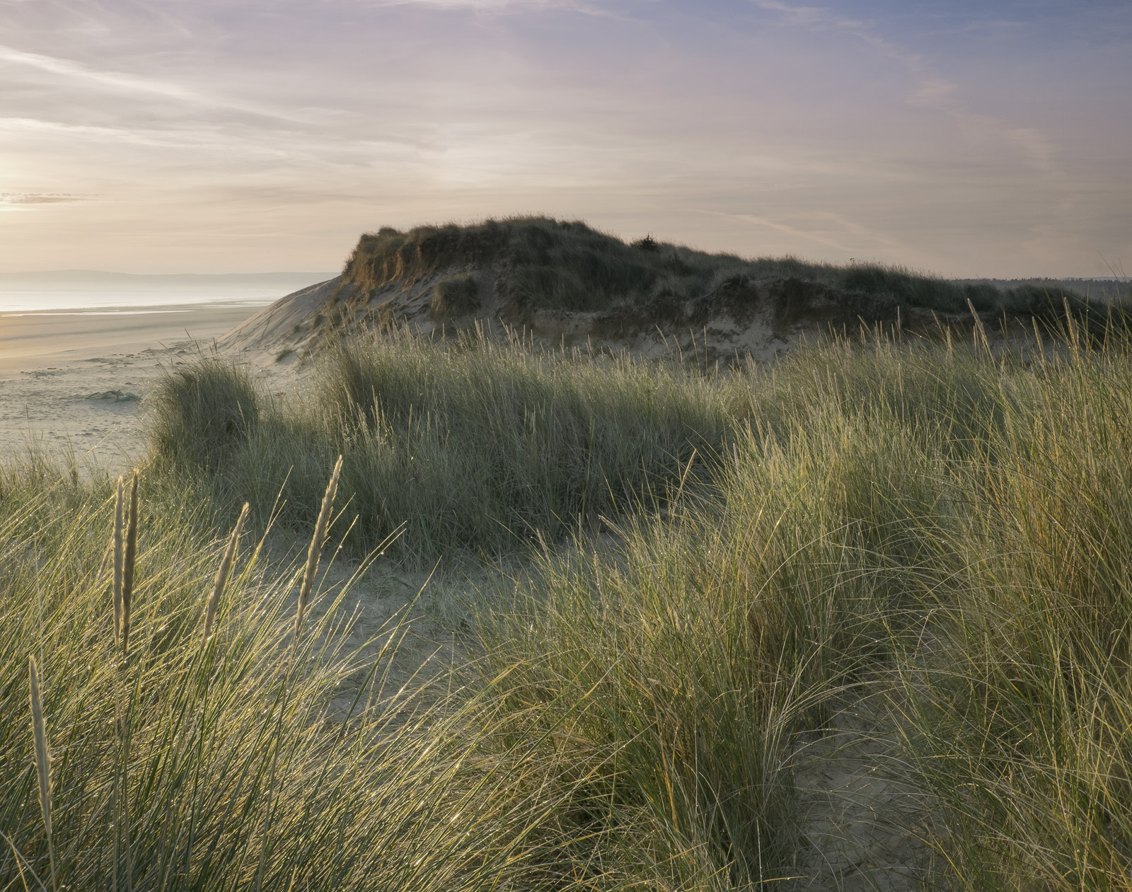 Weak lemon yellow sunlight softly back lights the dune grasses which are completely free of movement in the misty sunrise over...