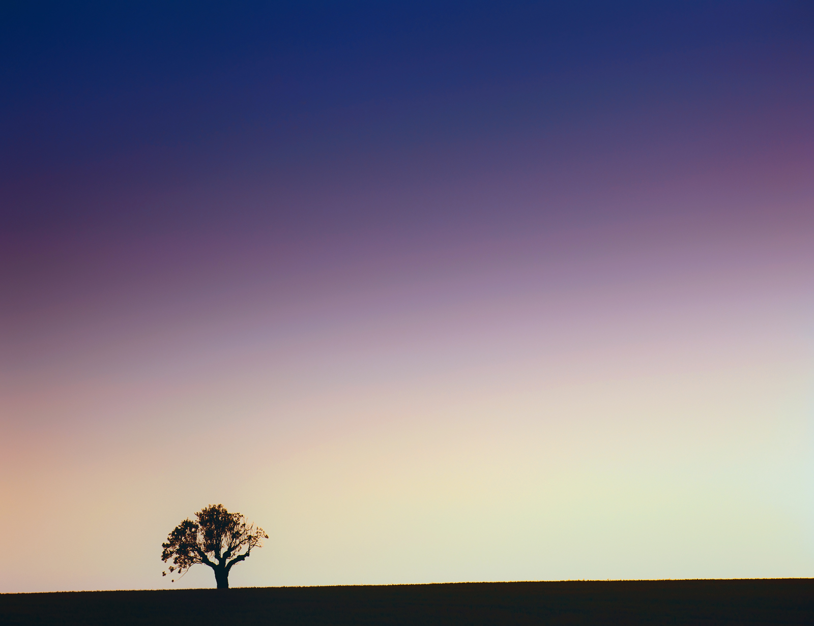 Whilst out exploring the lavendar fields near Valensole in Provence I noticed this shapely oak tree on the brow of a hill standing...
