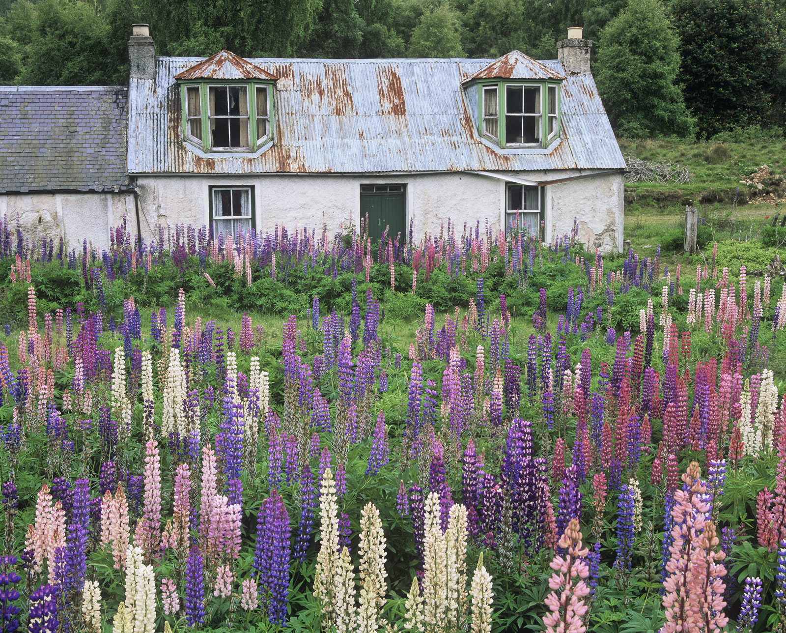 Whilst I have to admit this old tin roofed house is far from the most attractive place ever built the wild garden is a magnificent...