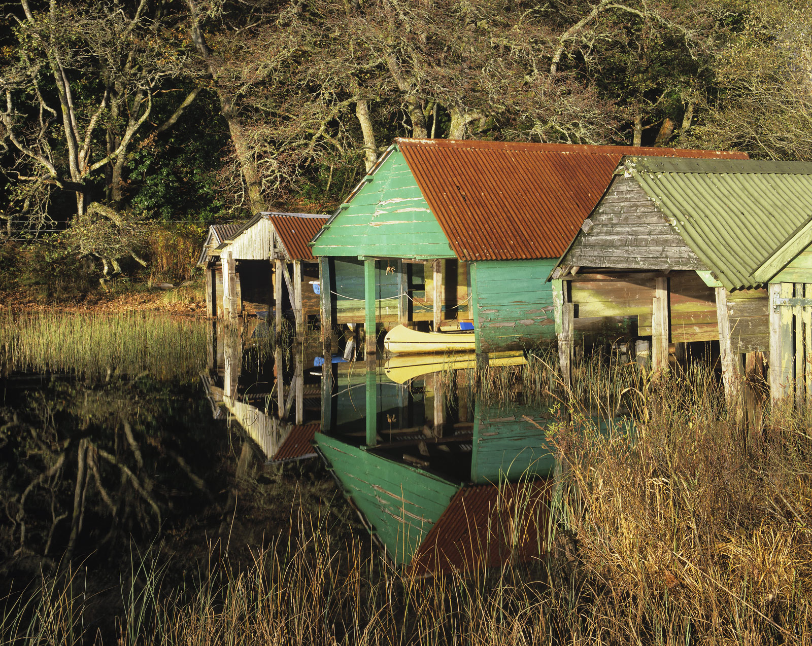 These colourful and extremely rickety wooden boat sheds have been nestling beside this reed bed on the edge of Loch Ard for many...