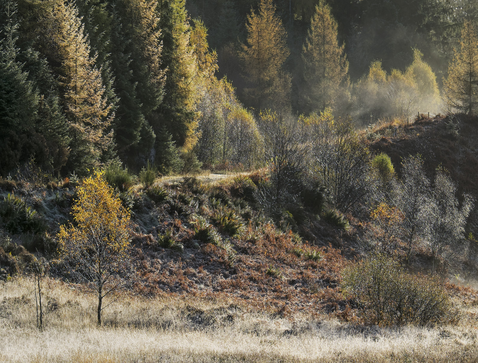 Morning Thaw Dukes Pass, Dukes Pass, Trossachs, Scotland, frost, mist, birch, grass, icy, twigs, glittering, diamonds , photo