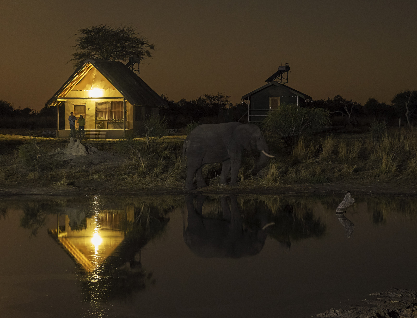 Night Visitor, Elephant Sands, Botswana, Africa, exceptional, evening, lodges, perimeter, porch, elephants, young couple, photo
